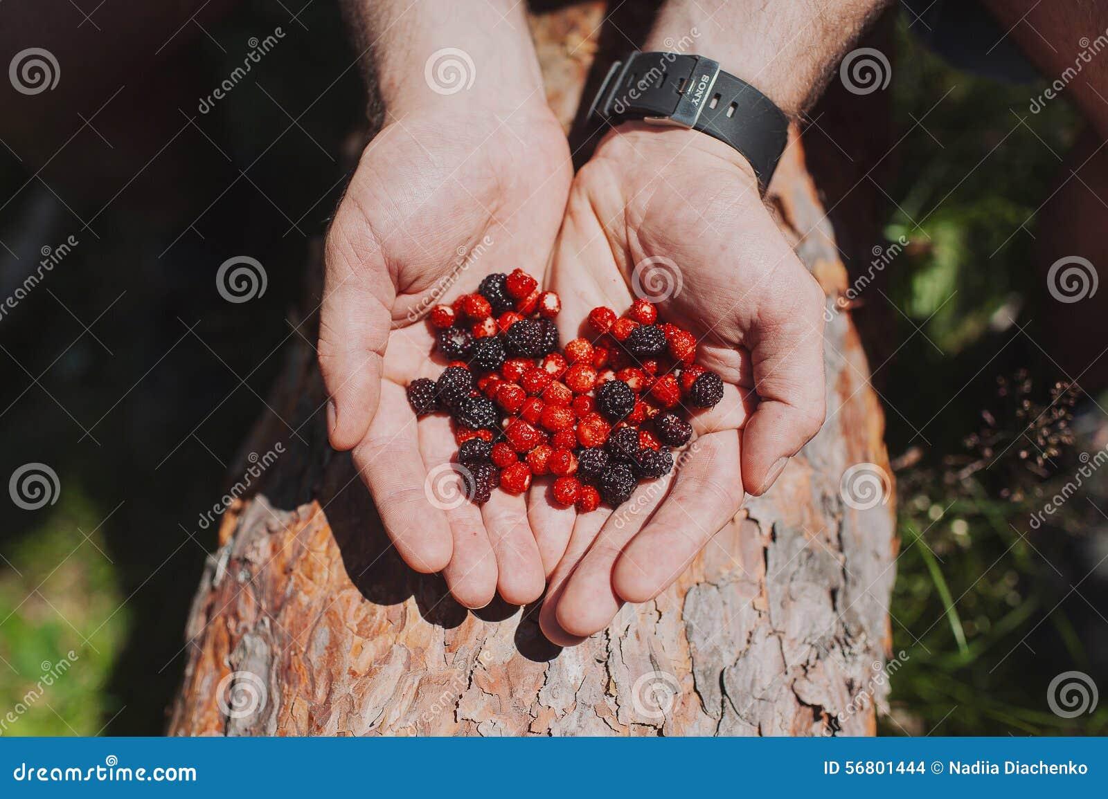 草莓和黑莓