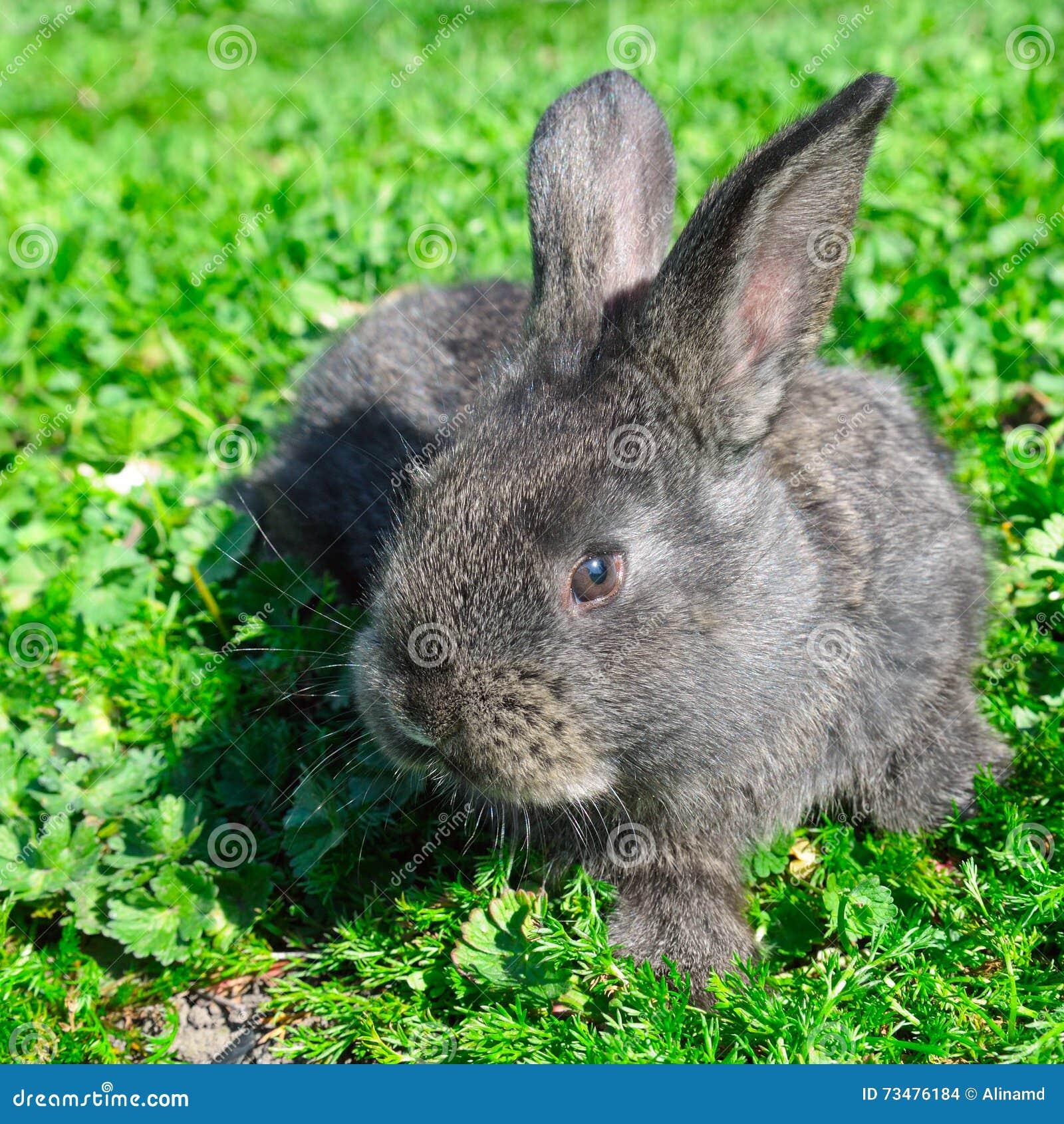 草绿色小的兔子