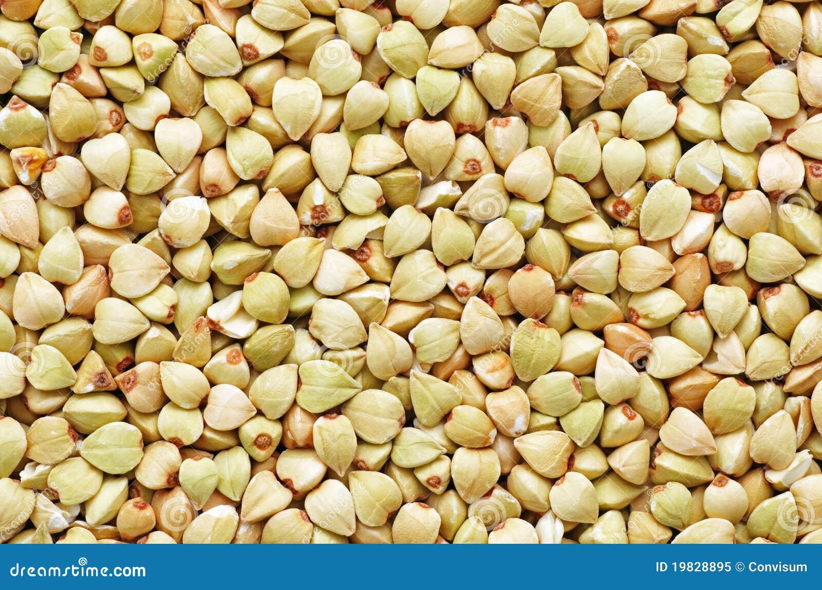 种子_荞麦种子
