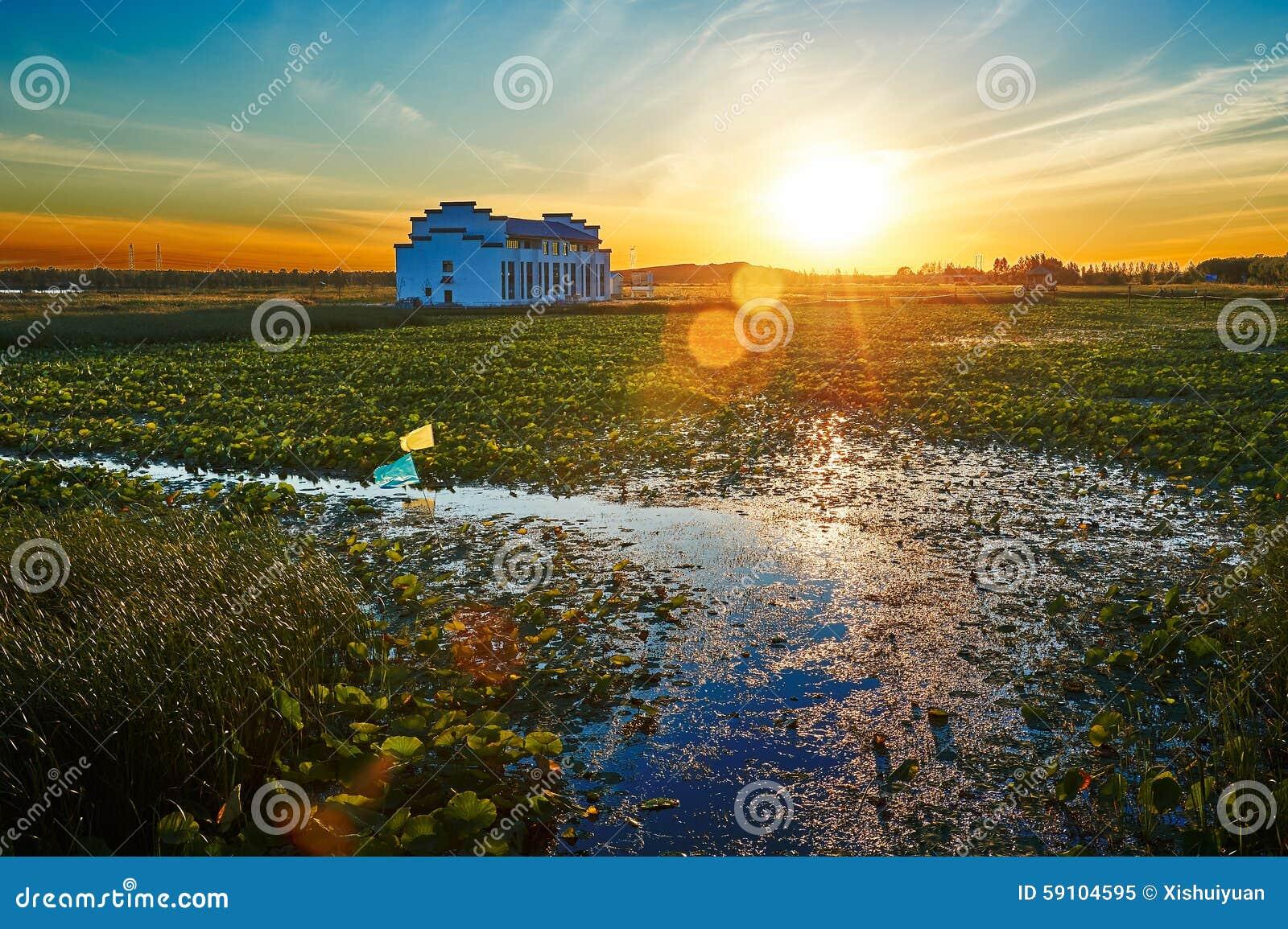 荷花池日落