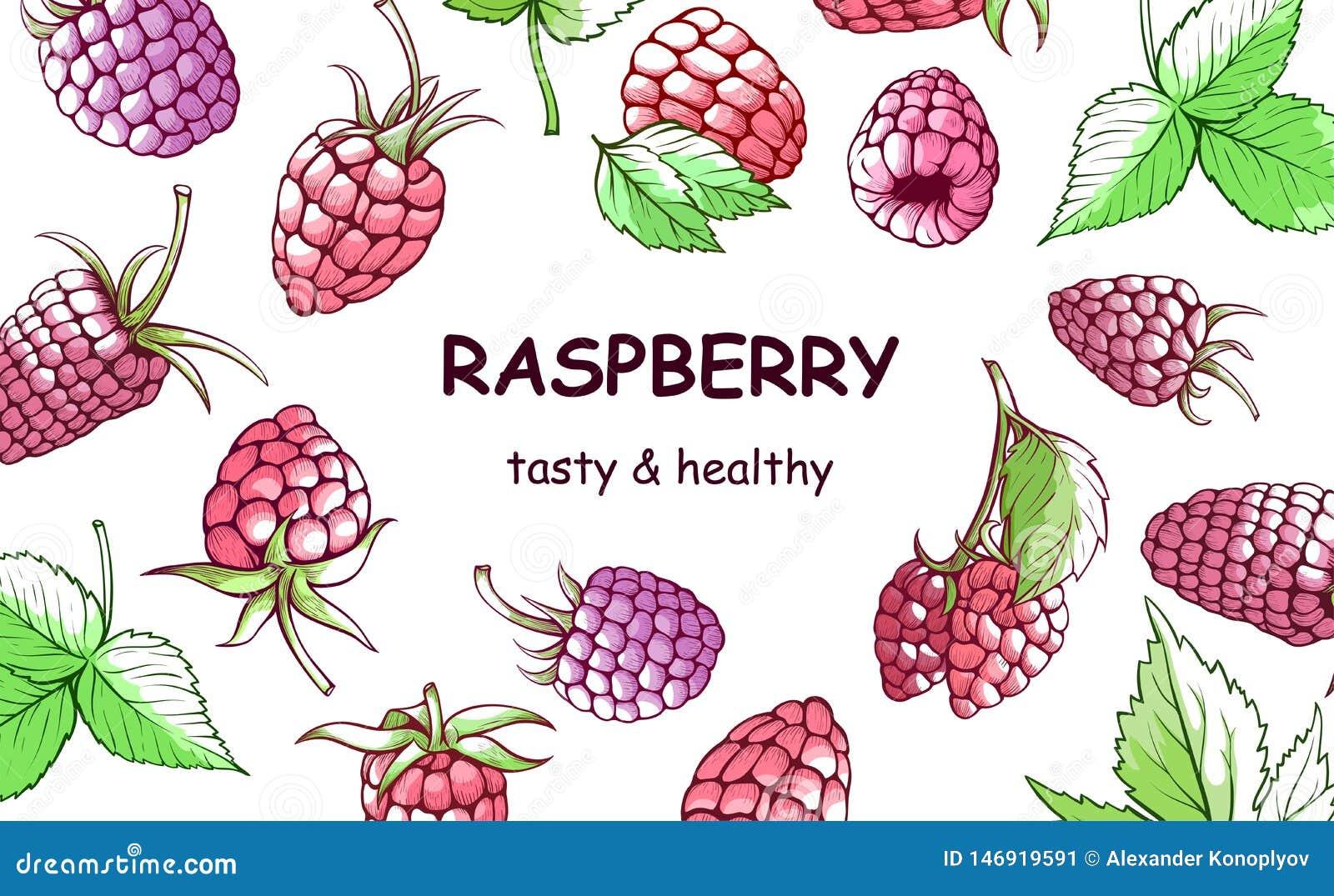 莓手拉的背景,甜和鲜美