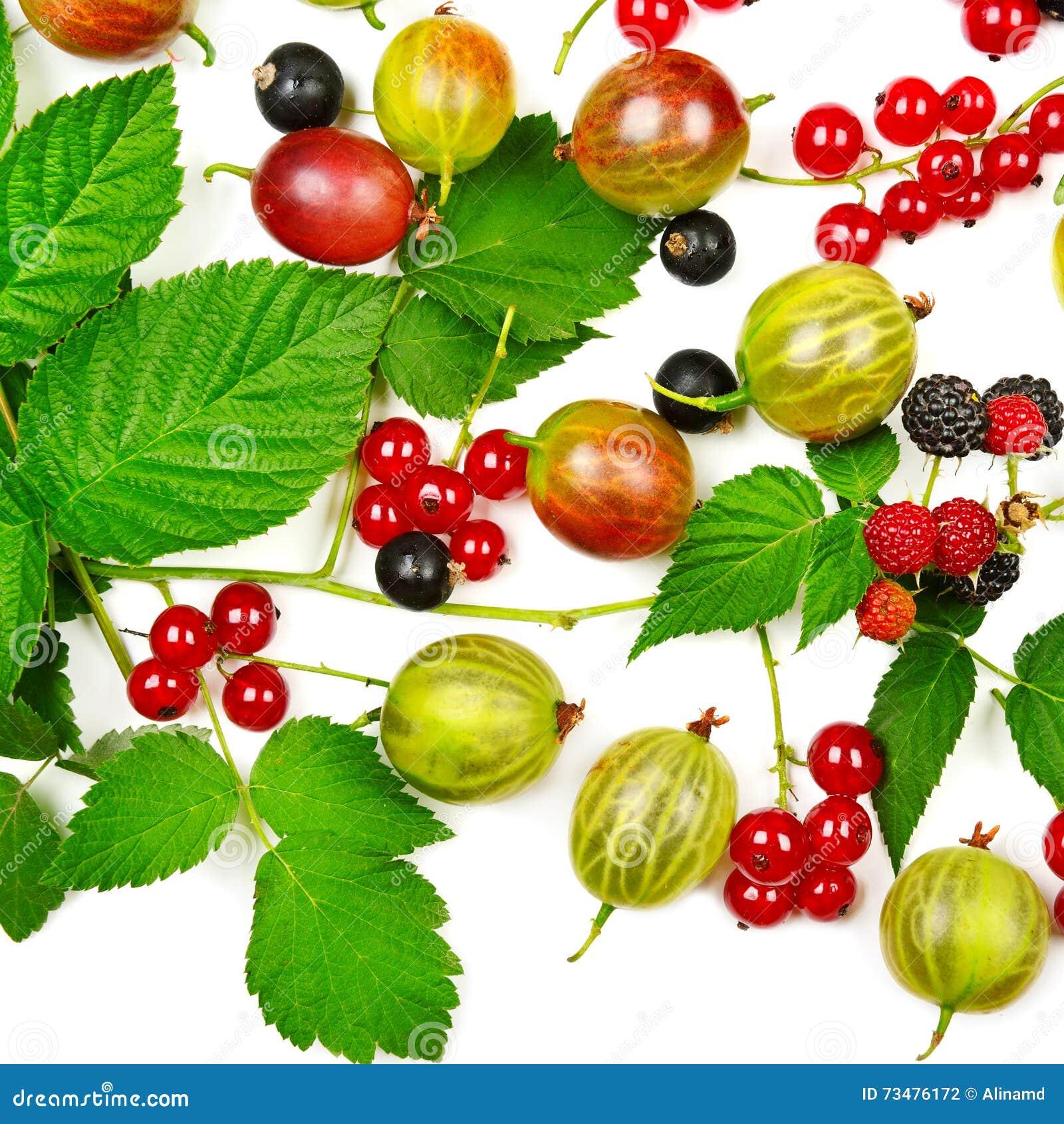 莓果黑色、鹅莓和黑莓