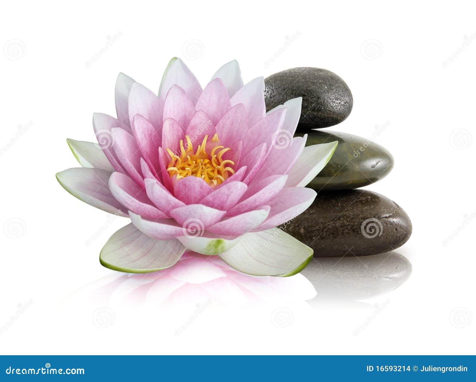 莲花粉红色优美的石头