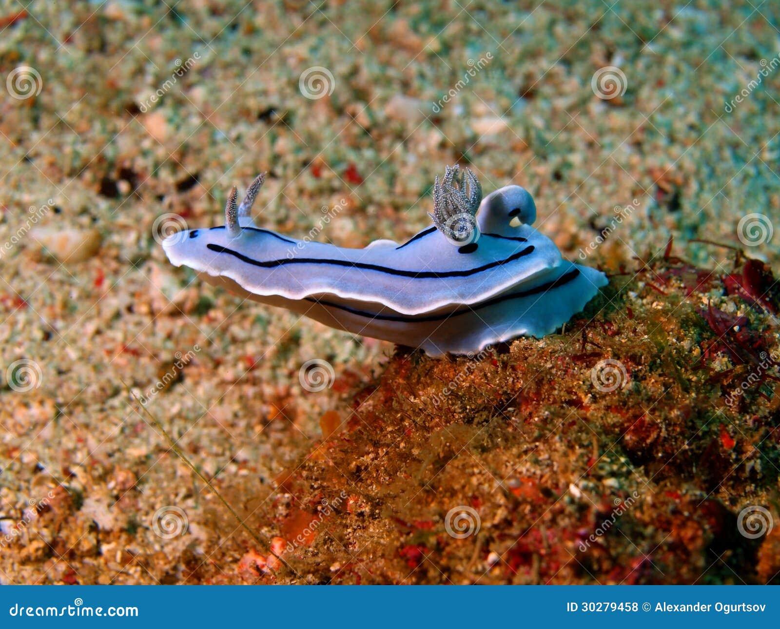 菲律宾海的海参