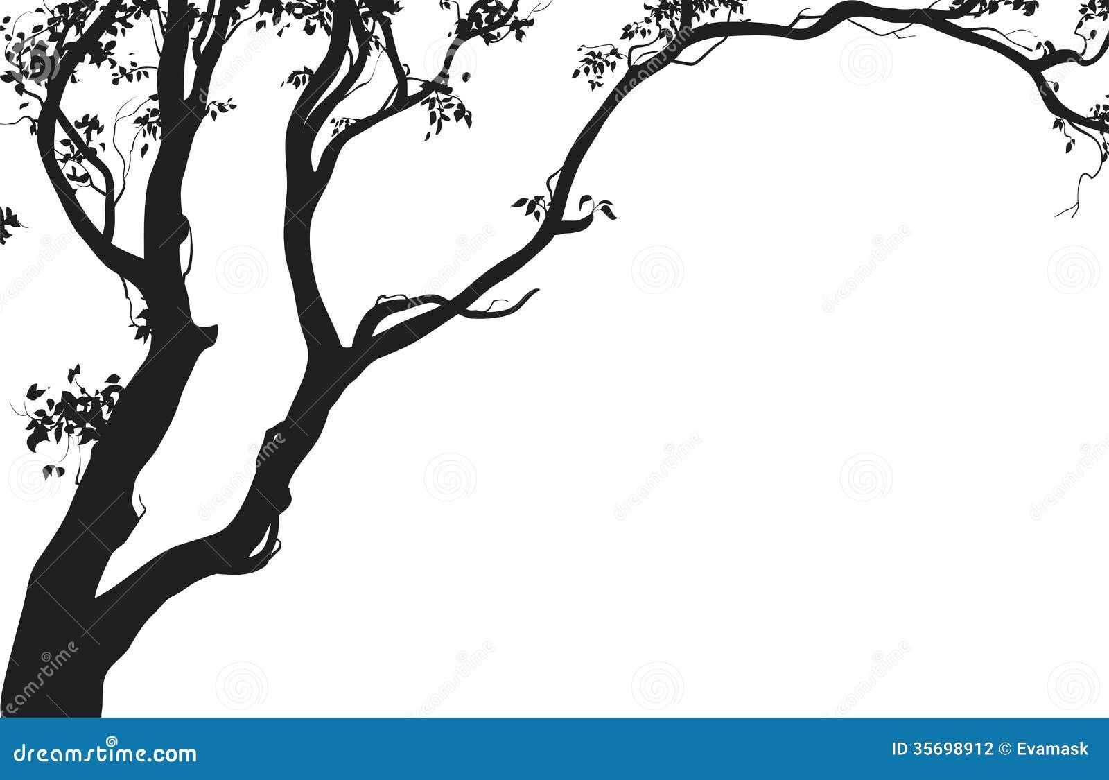 在白色背景,例证的落叶树剪影.图片