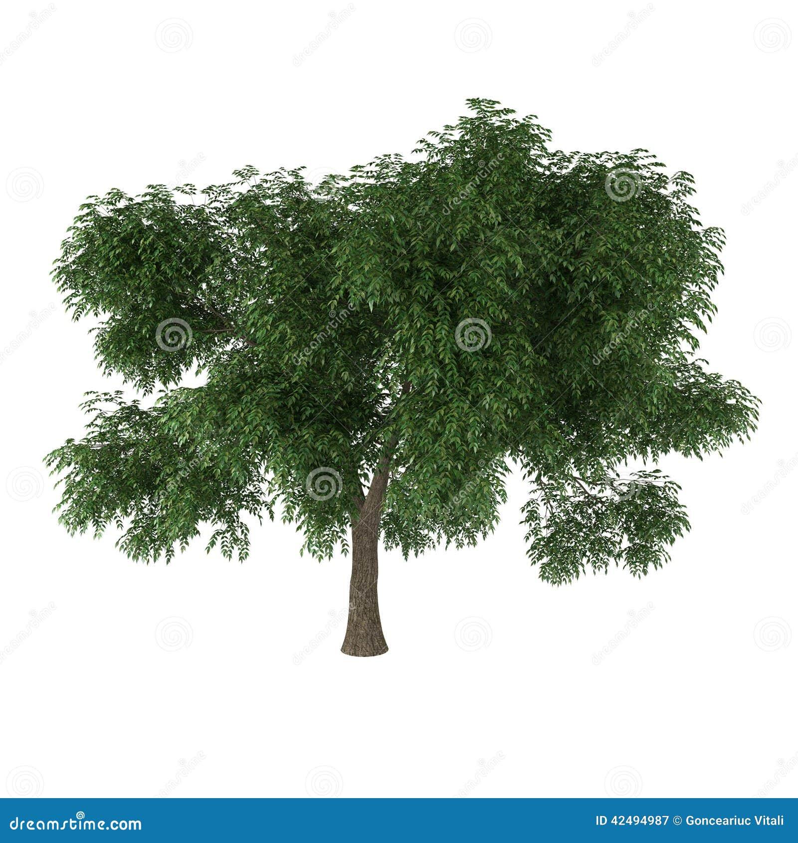 落叶树图片