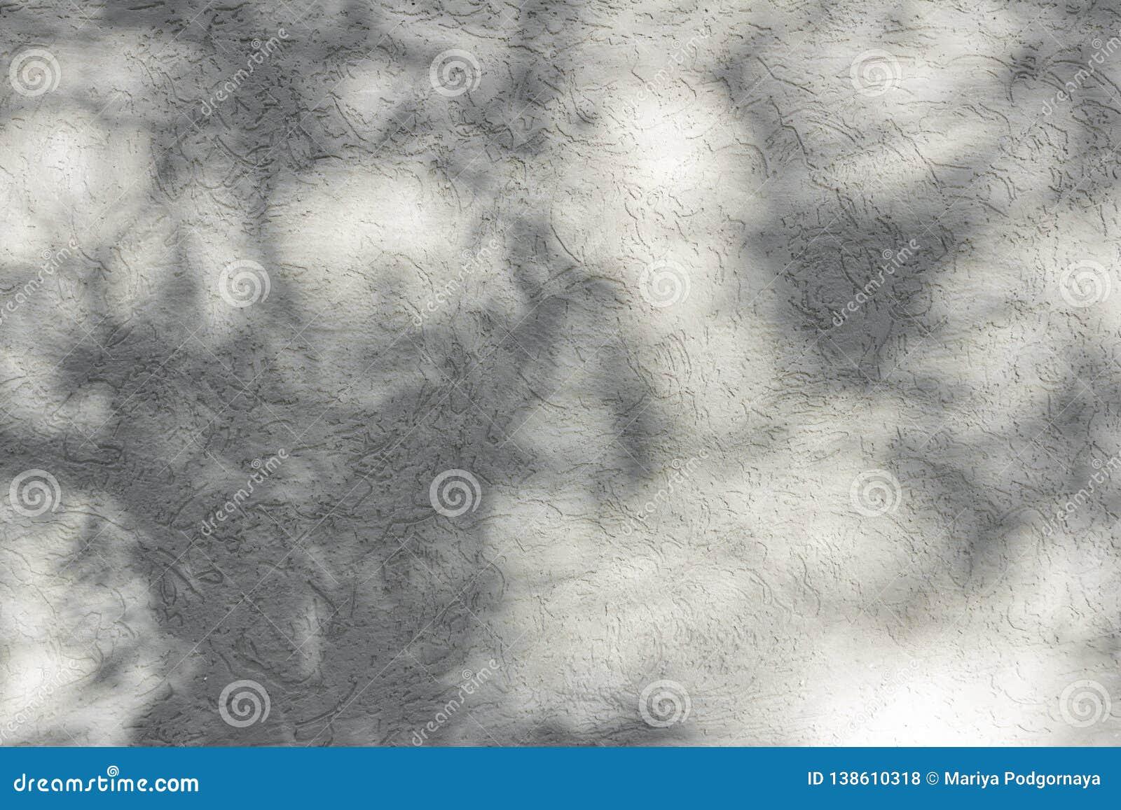 落在背景设计的白色混凝土墙上的自然叶子的阴影