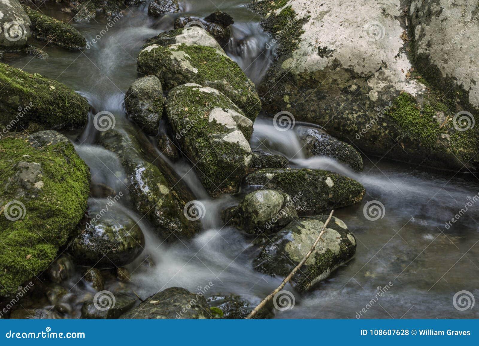 落在青苔的柔滑的水盖了岩石