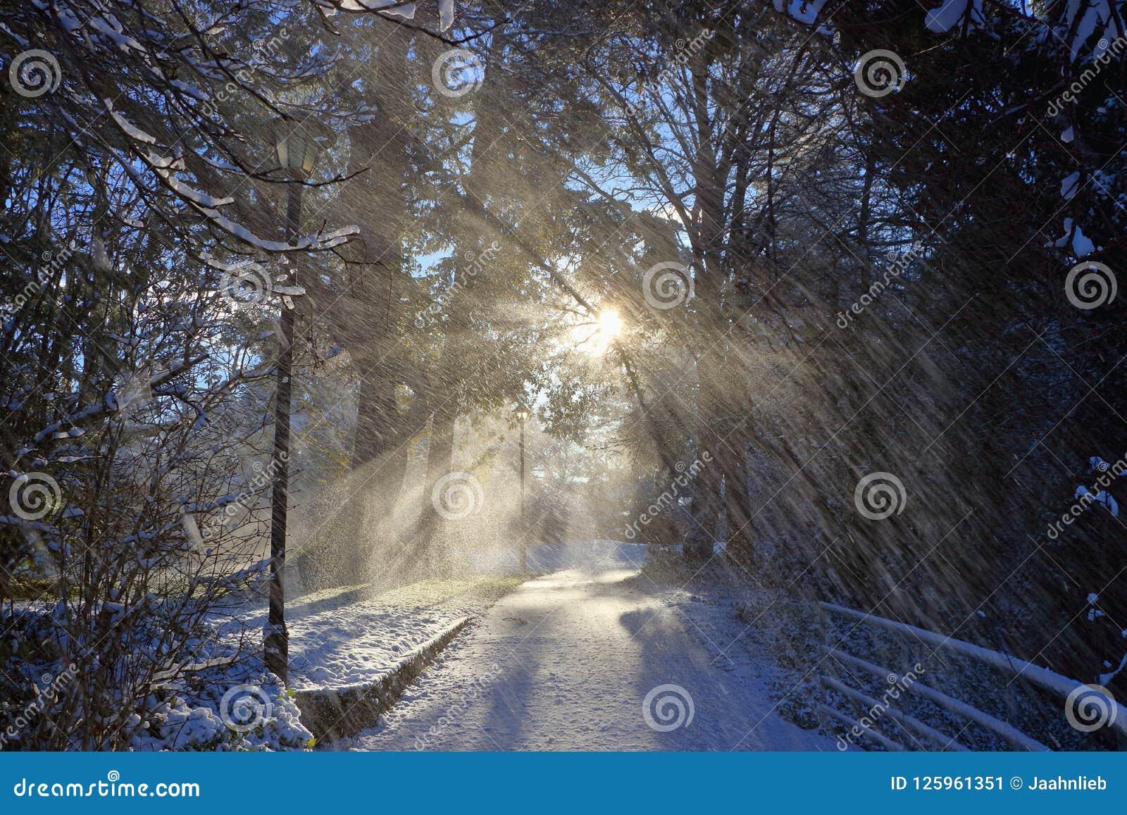 落的雪和上升的冬天在峡谷水路公园,维多利亚, B的太阳 C