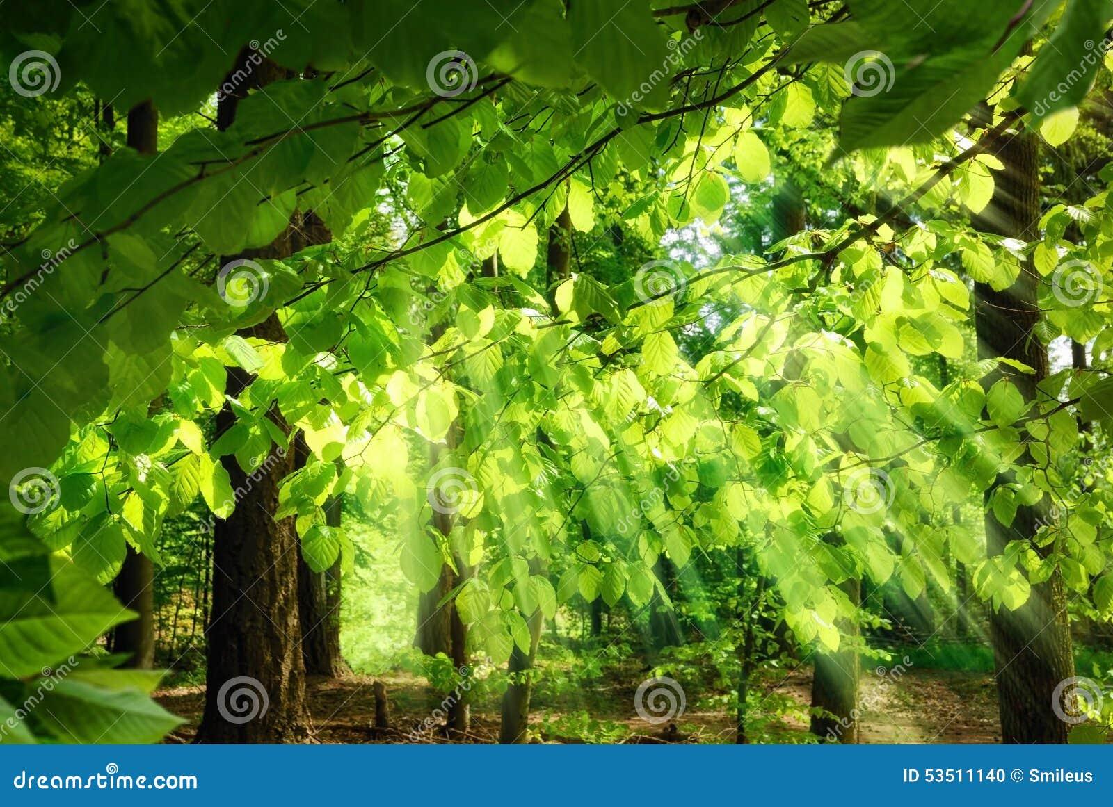 落通过叶子的阳光