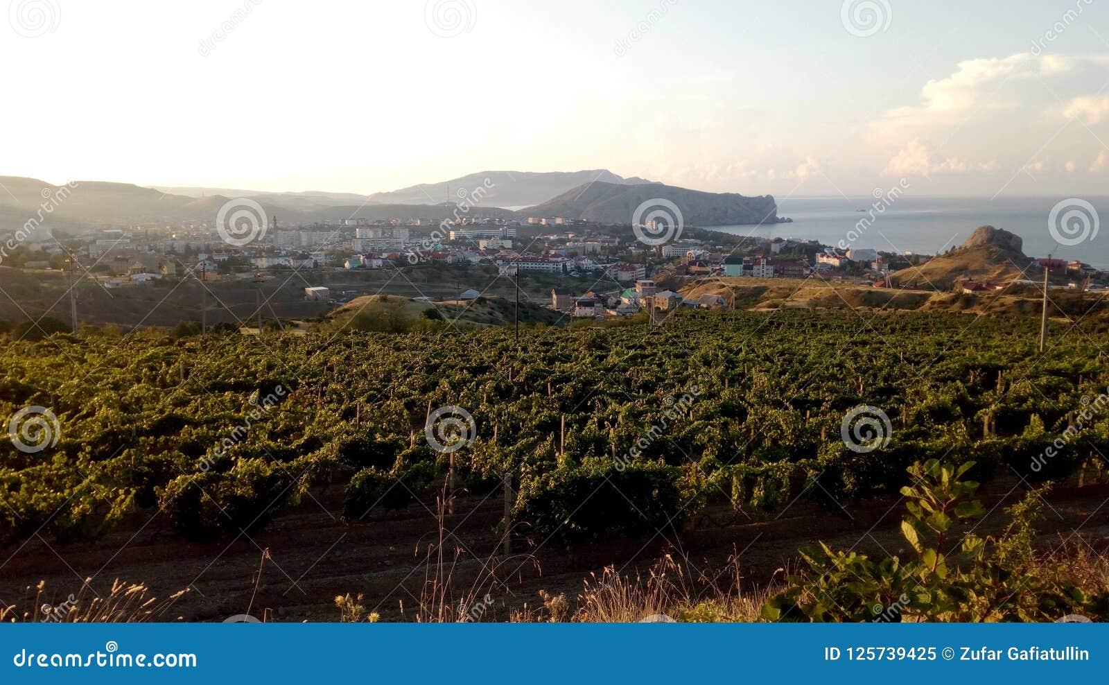 葡萄园和老城堡的风景在小山