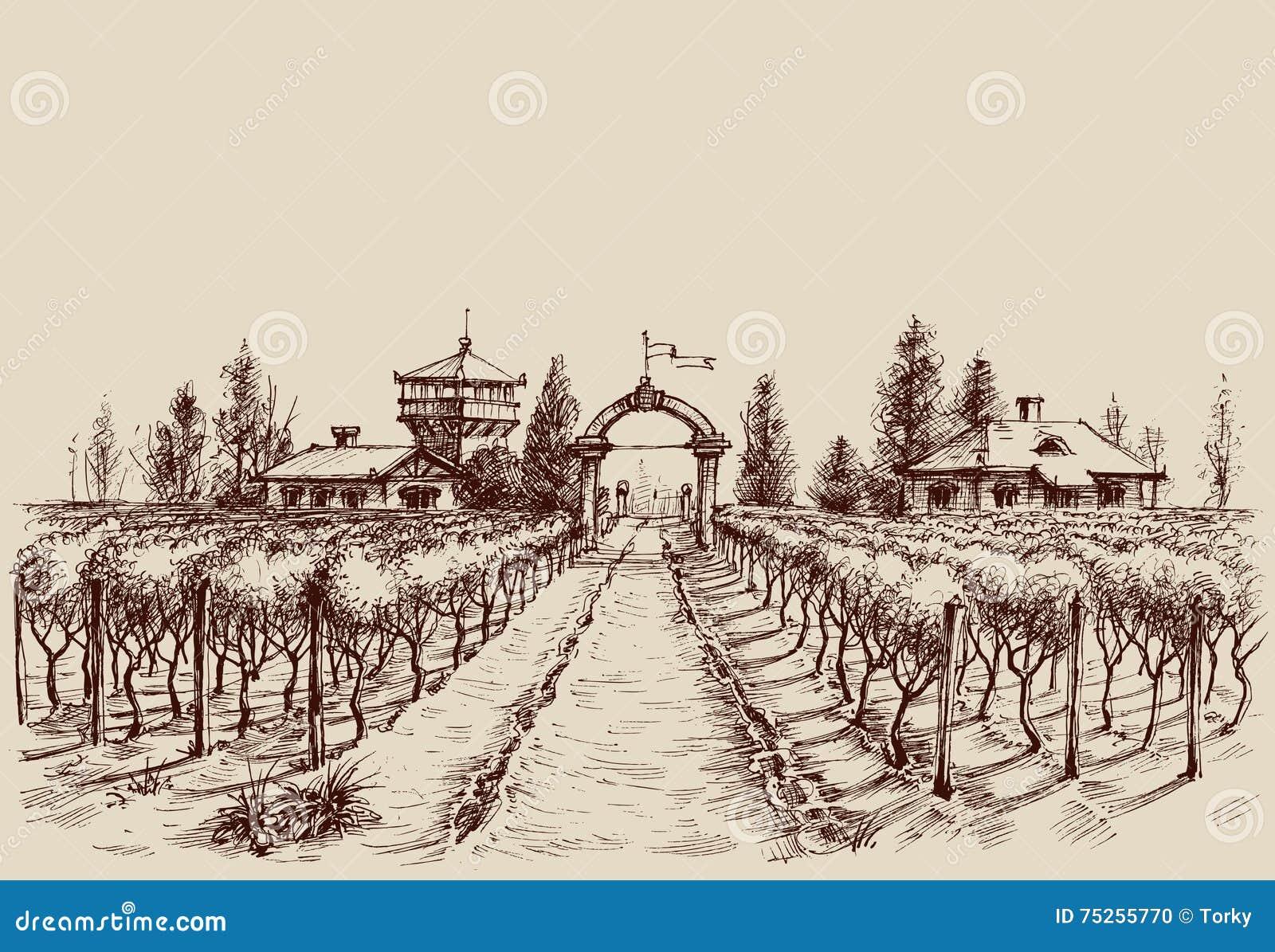 葡萄园图画