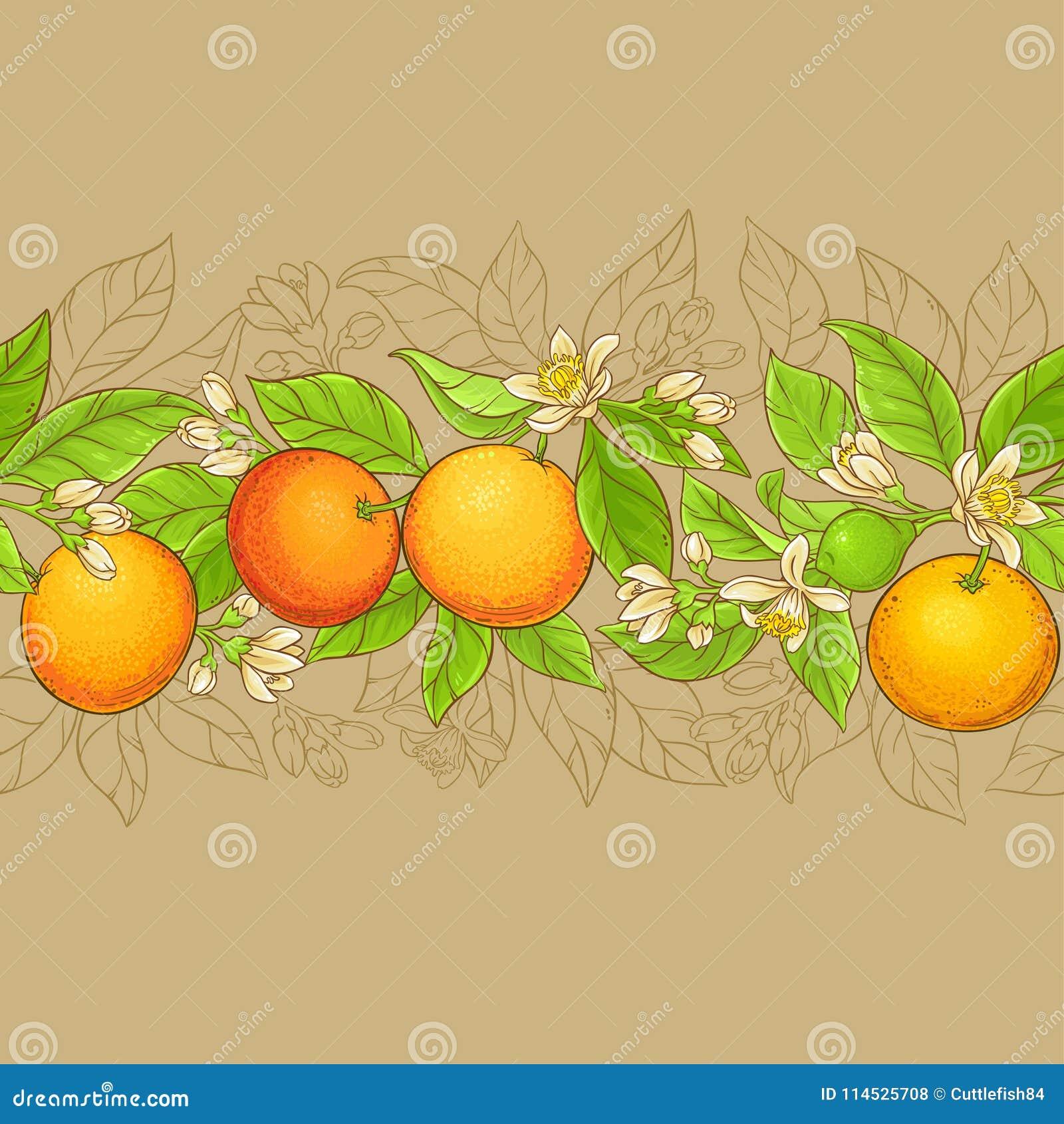 葡萄柚传染媒介样式
