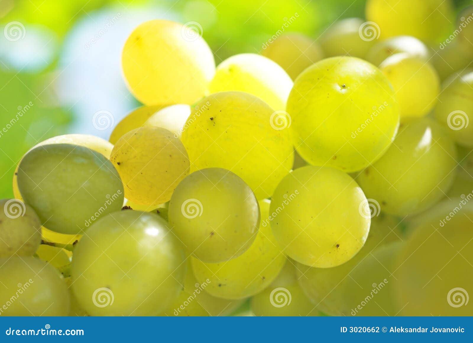 葡萄葡萄园