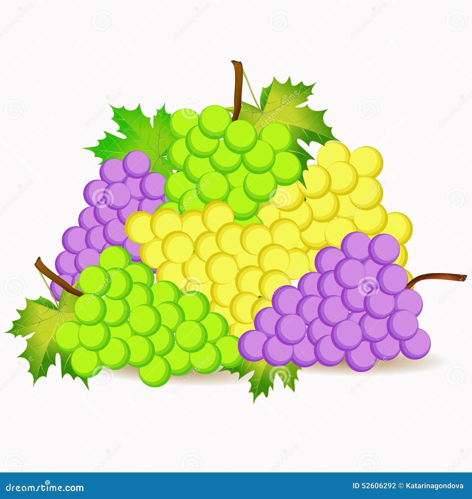 绿色,黄色和紫罗兰色葡萄动画片例证.