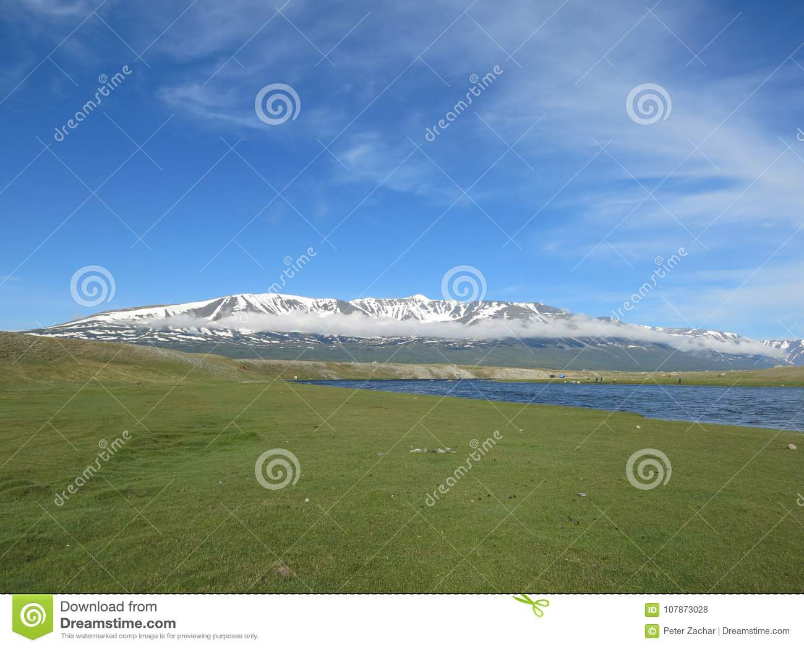 蒙古绵羊-传统生活方式和风景在西部蒙古