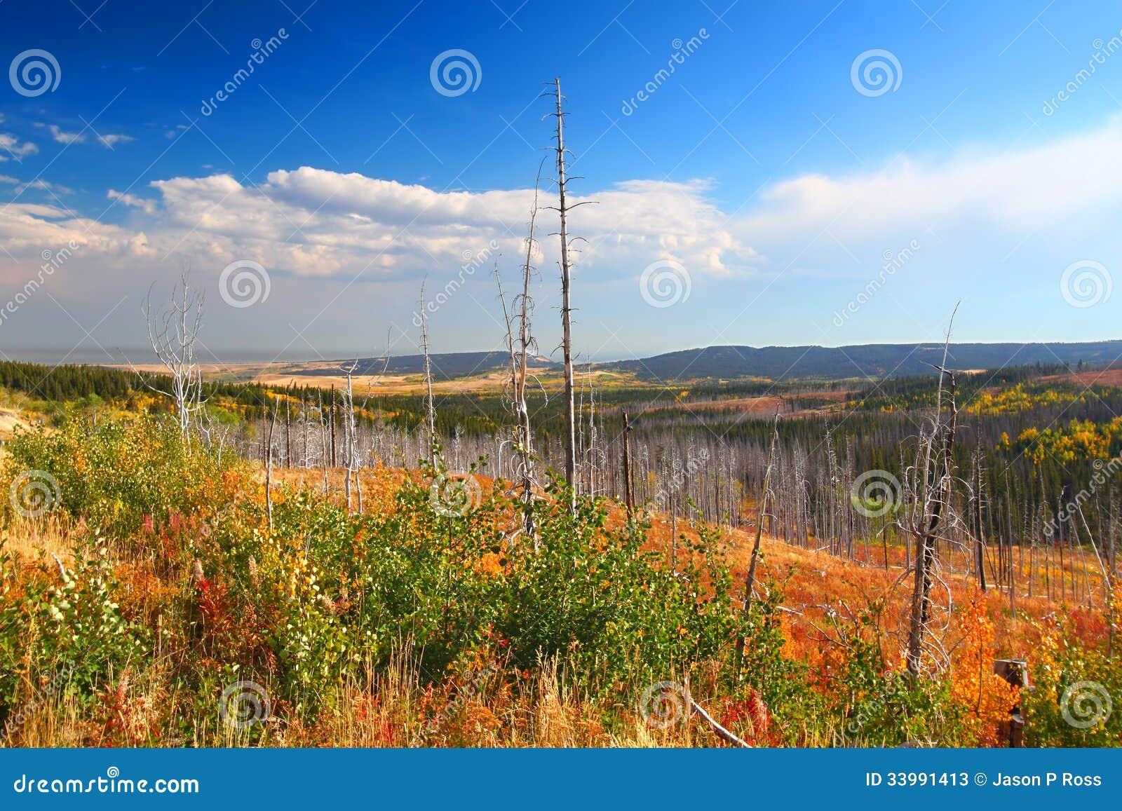 蒙大拿秋天风景