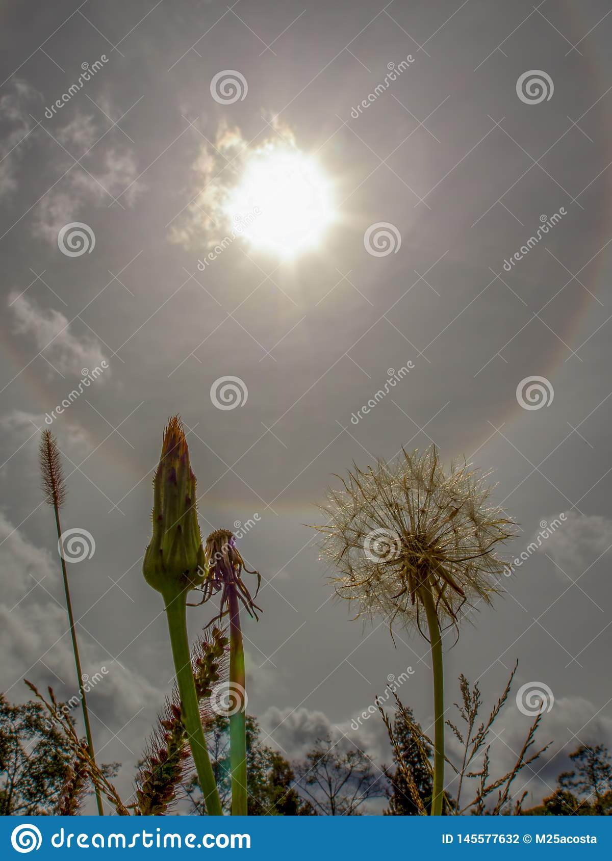 蒲公英绒毛和一些草