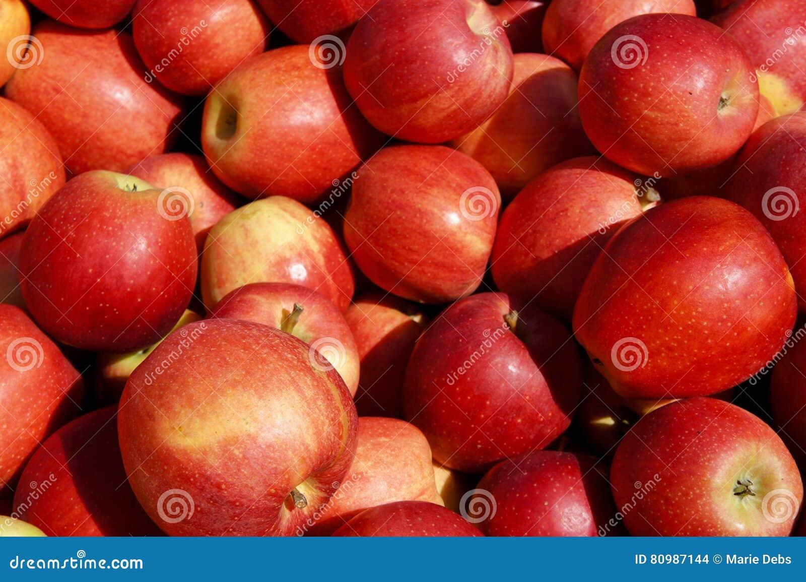 蒲式耳苹果