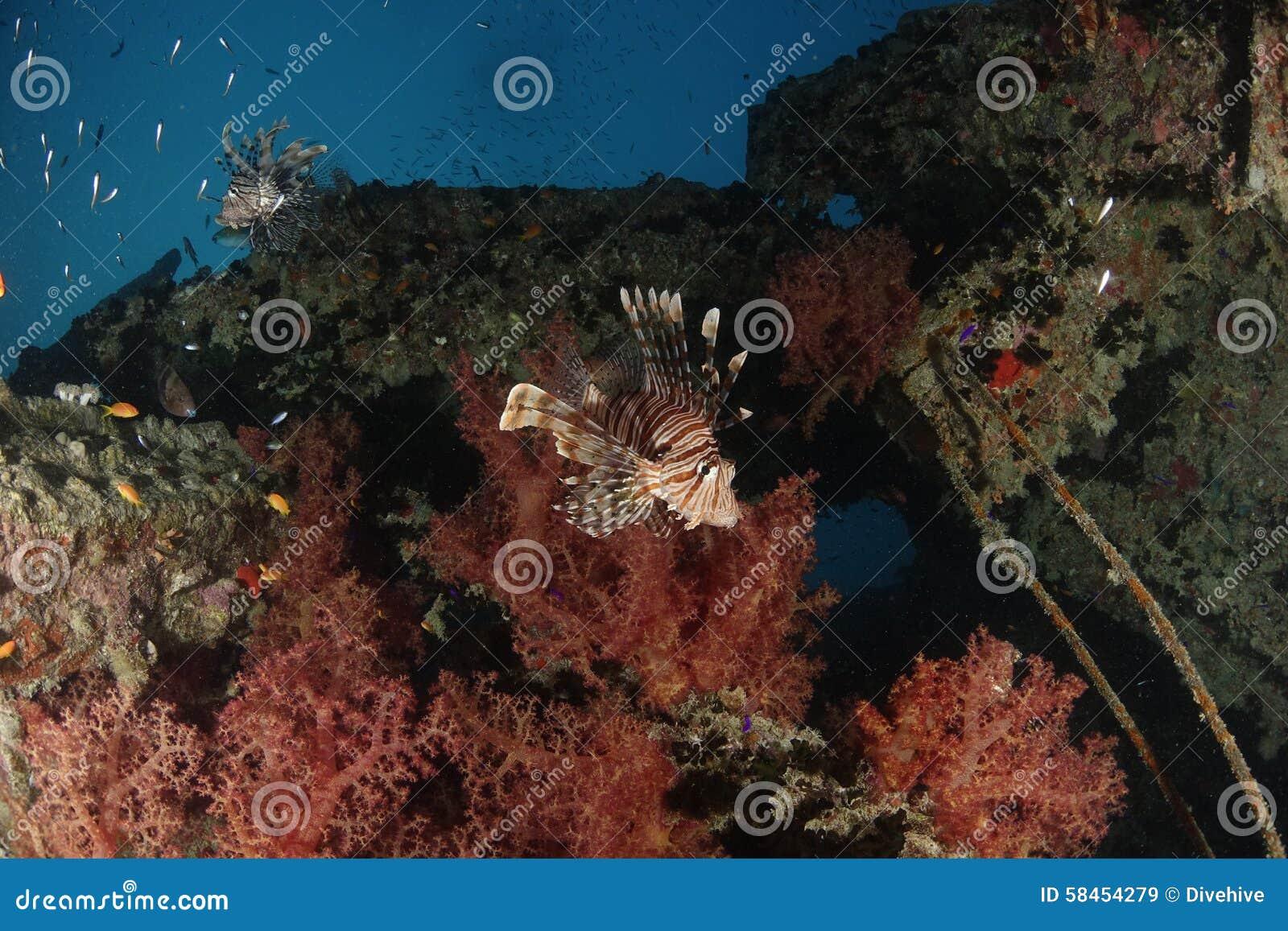 蓑鱼在红海,埃及