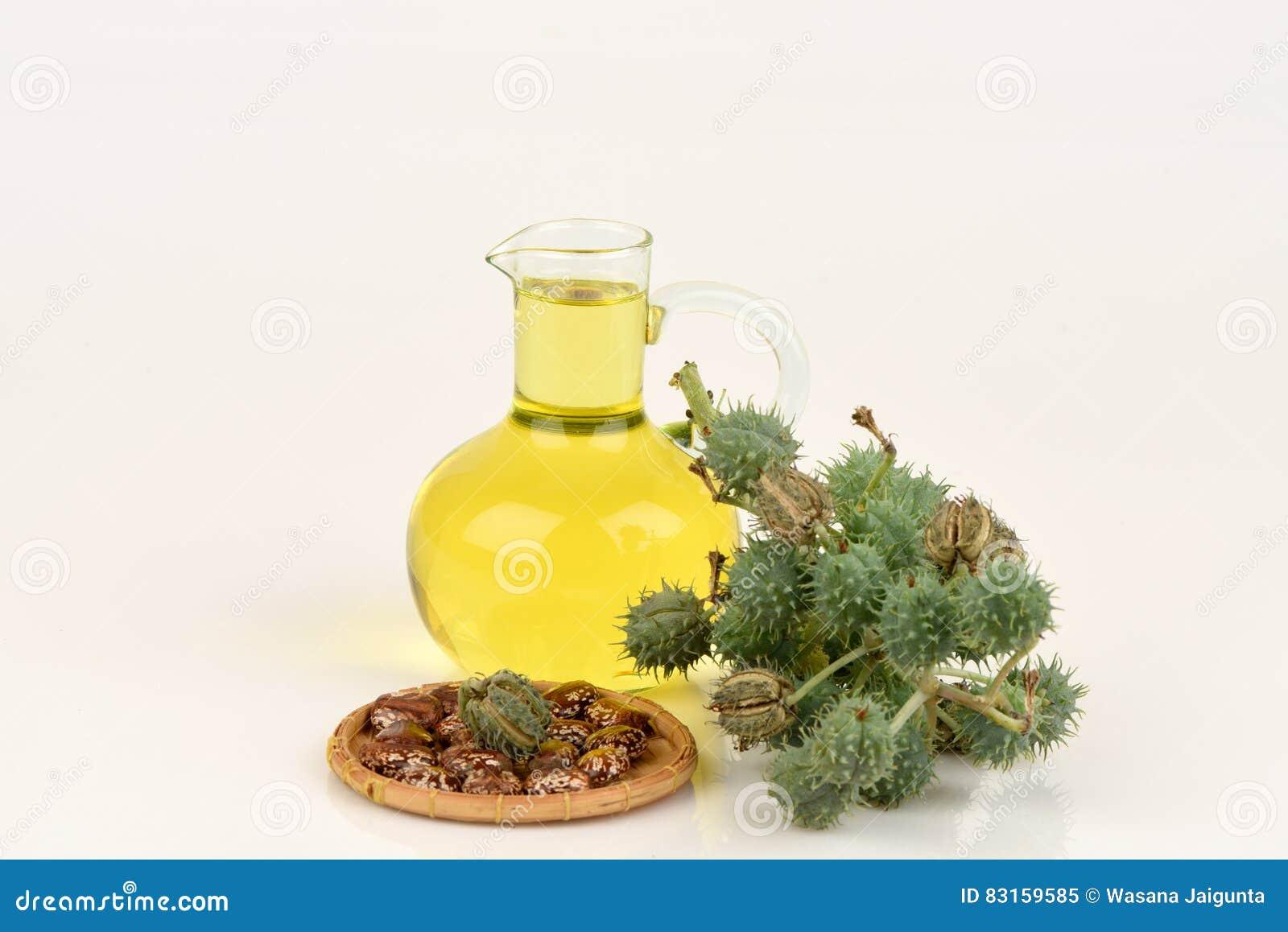 蓖麻油瓶用铸工果子、种子和叶子