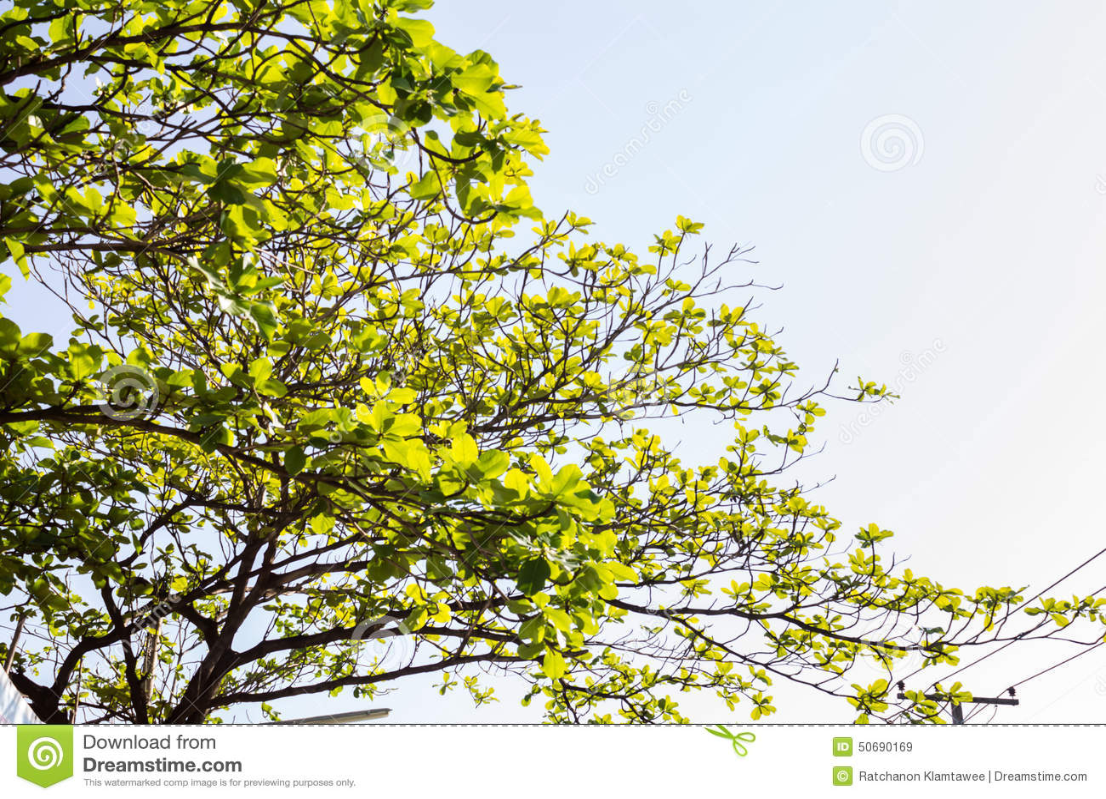Download 蓝天和树 库存图片. 图片 包括有 夏天, 晴朗, ,并且, beautifuler, 的treadled - 50690169