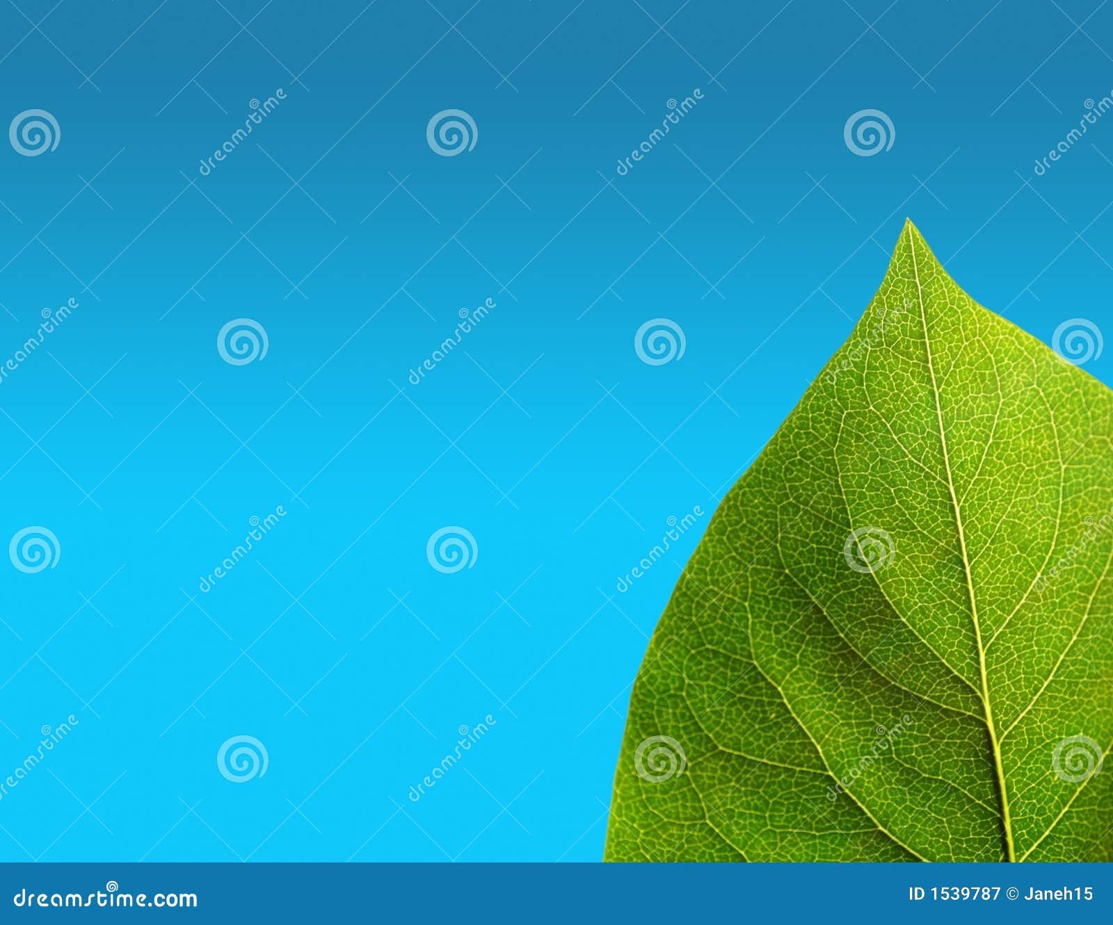 蓝绿色叶子
