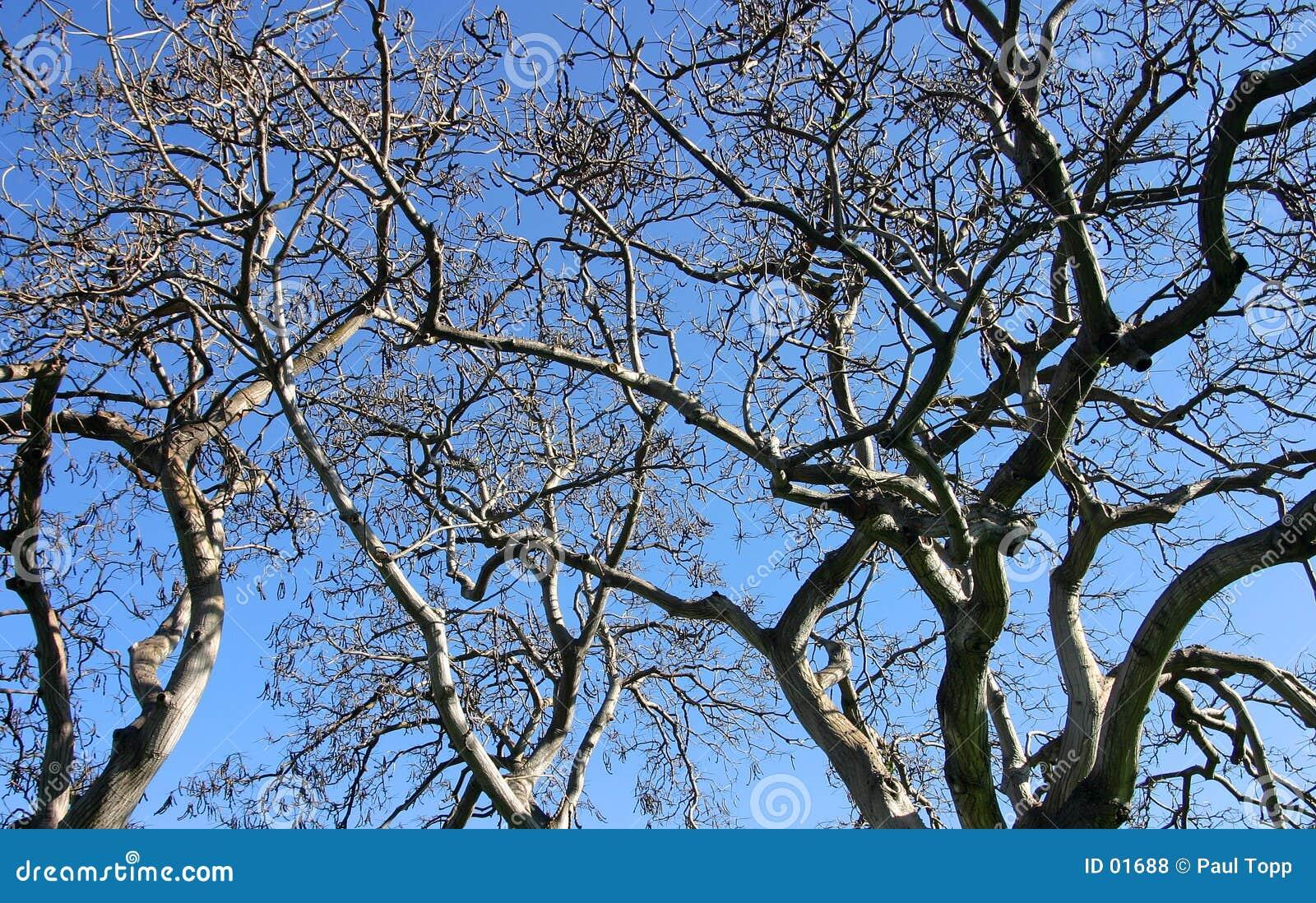 蓝色分行查出的天空结构树