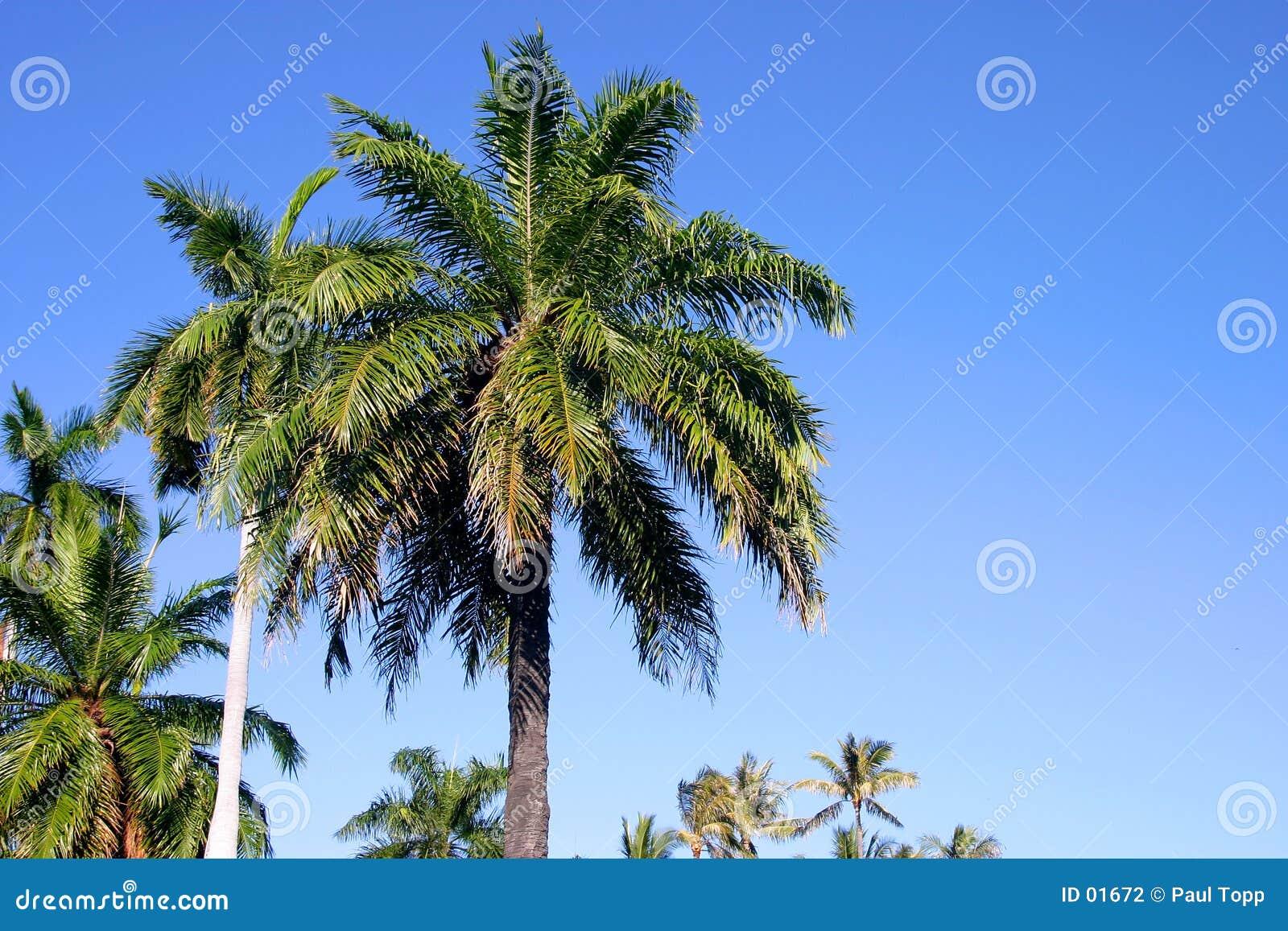 蓝色夏威夷掌上型计算机天空结构树