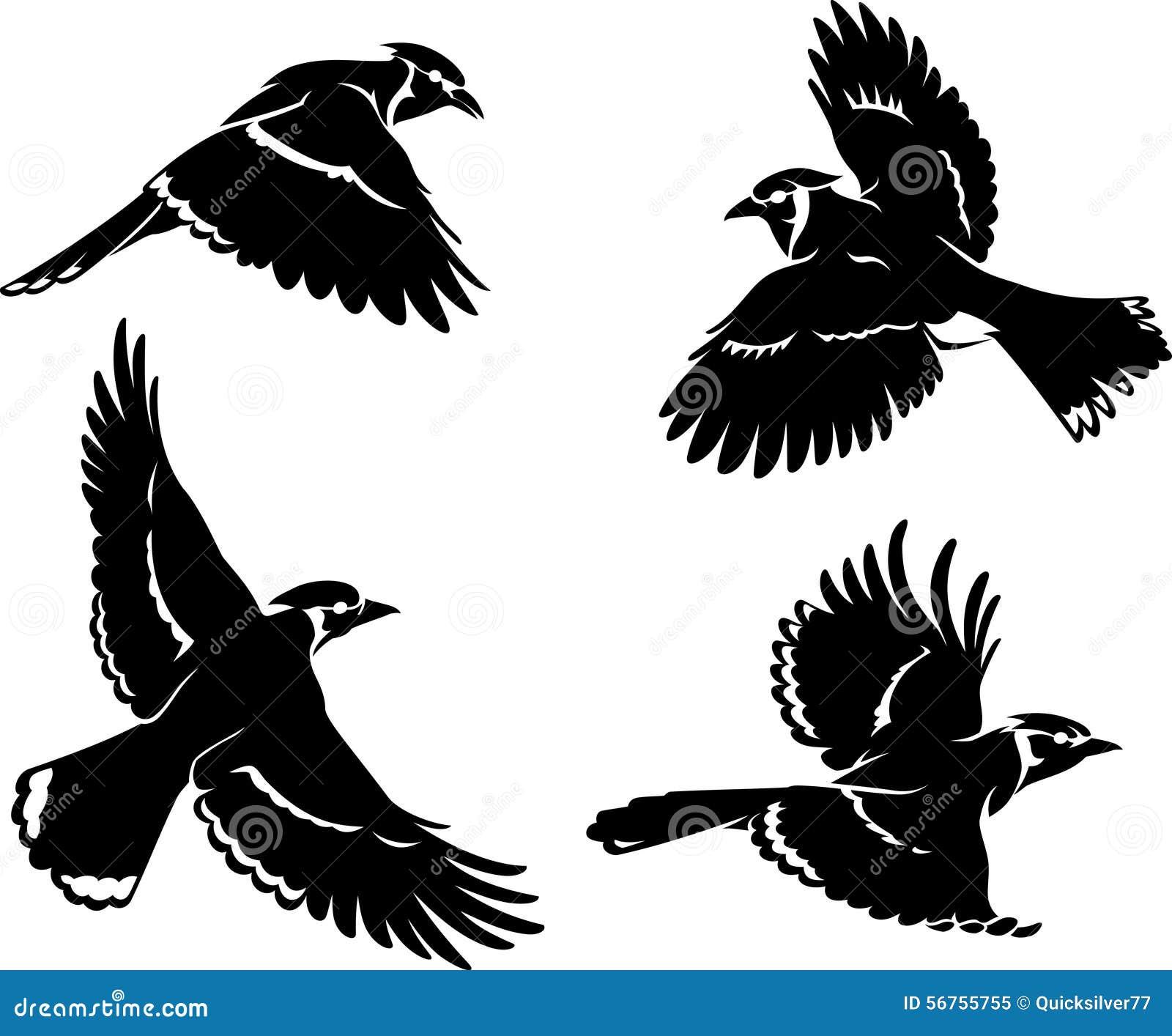 蓝色尖嘴鸟鸟集合剪影