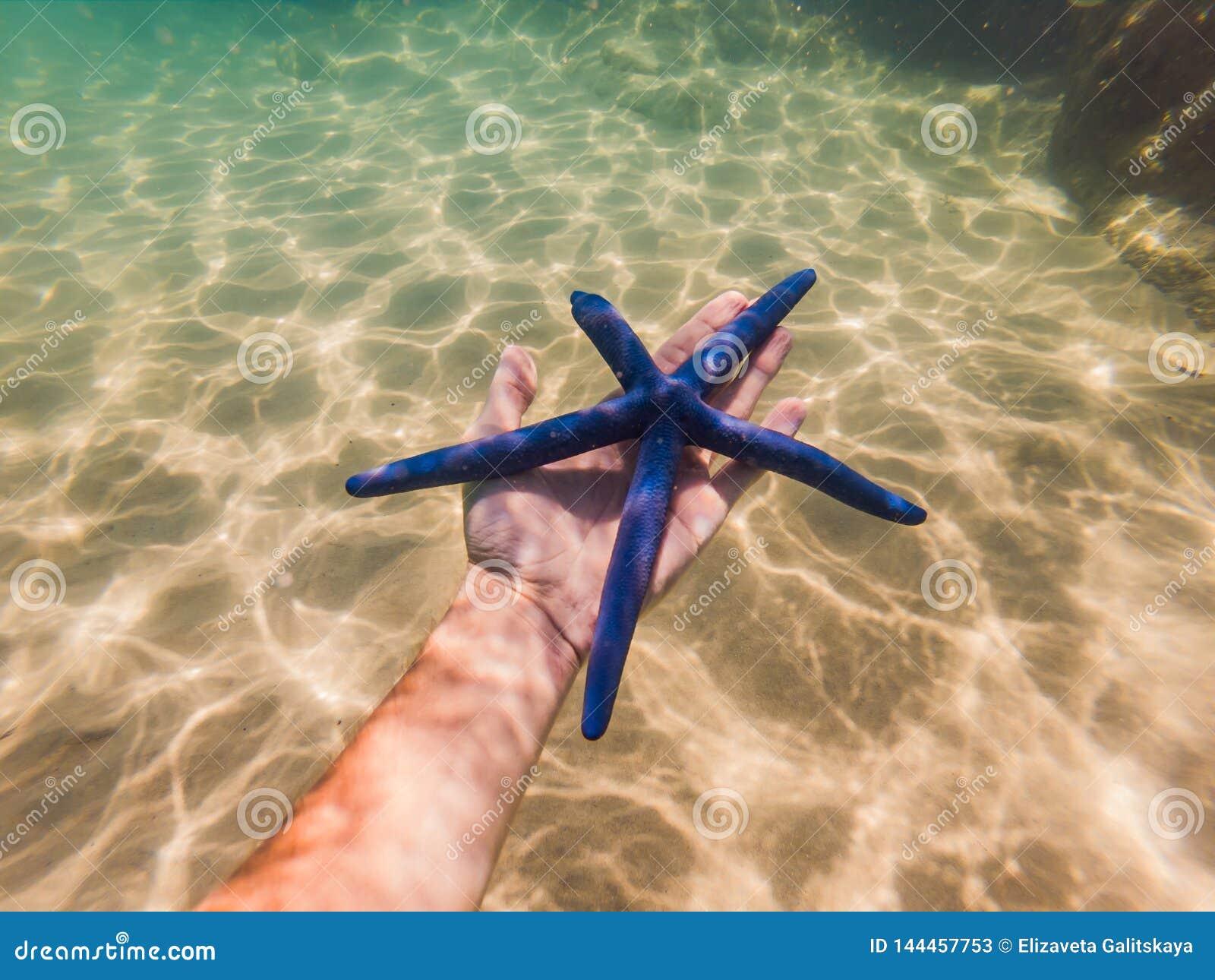 蓝色海星在水下的手上