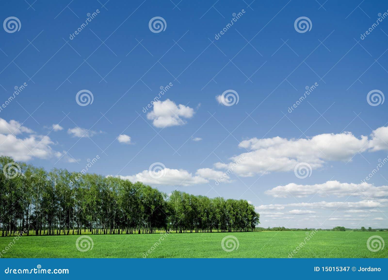 蓝色深绿色横向天空夏天