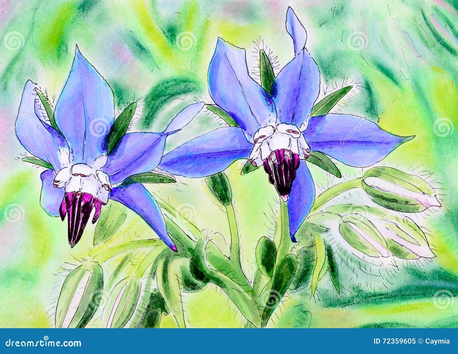 蓝色琉璃苣花原始的绘画