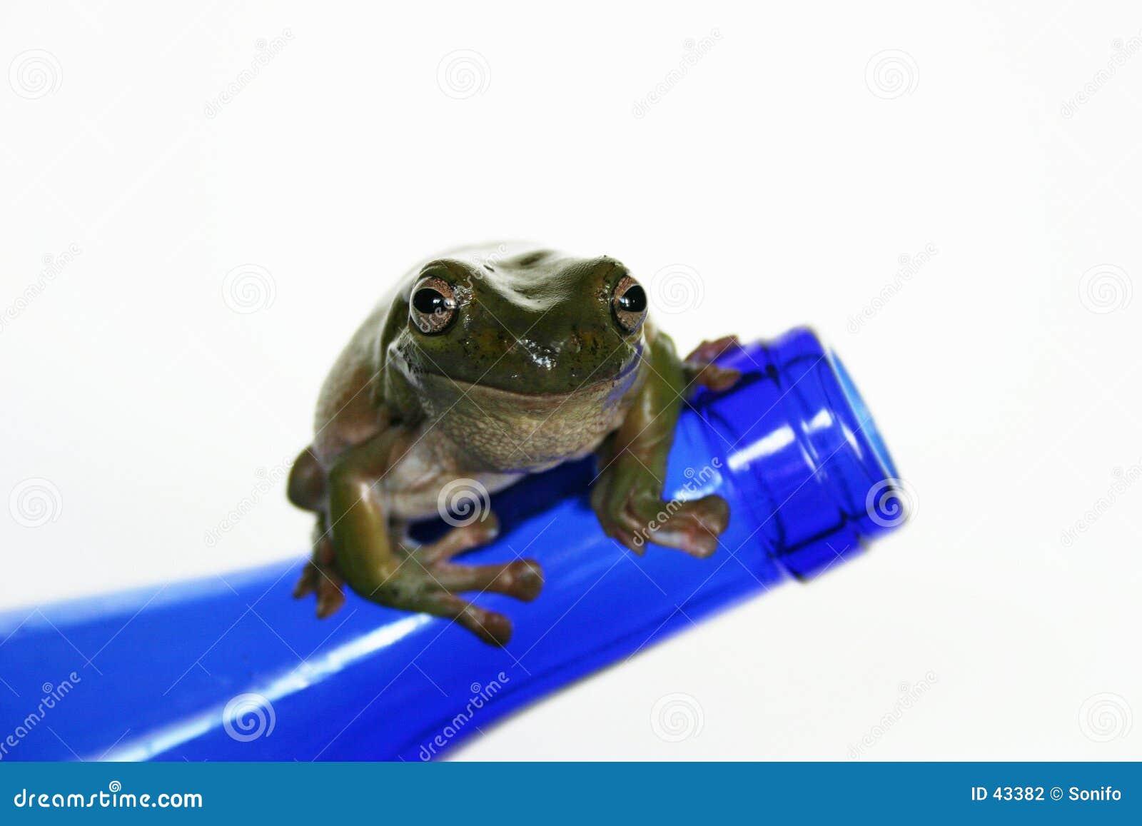 蓝色瓶青蛙