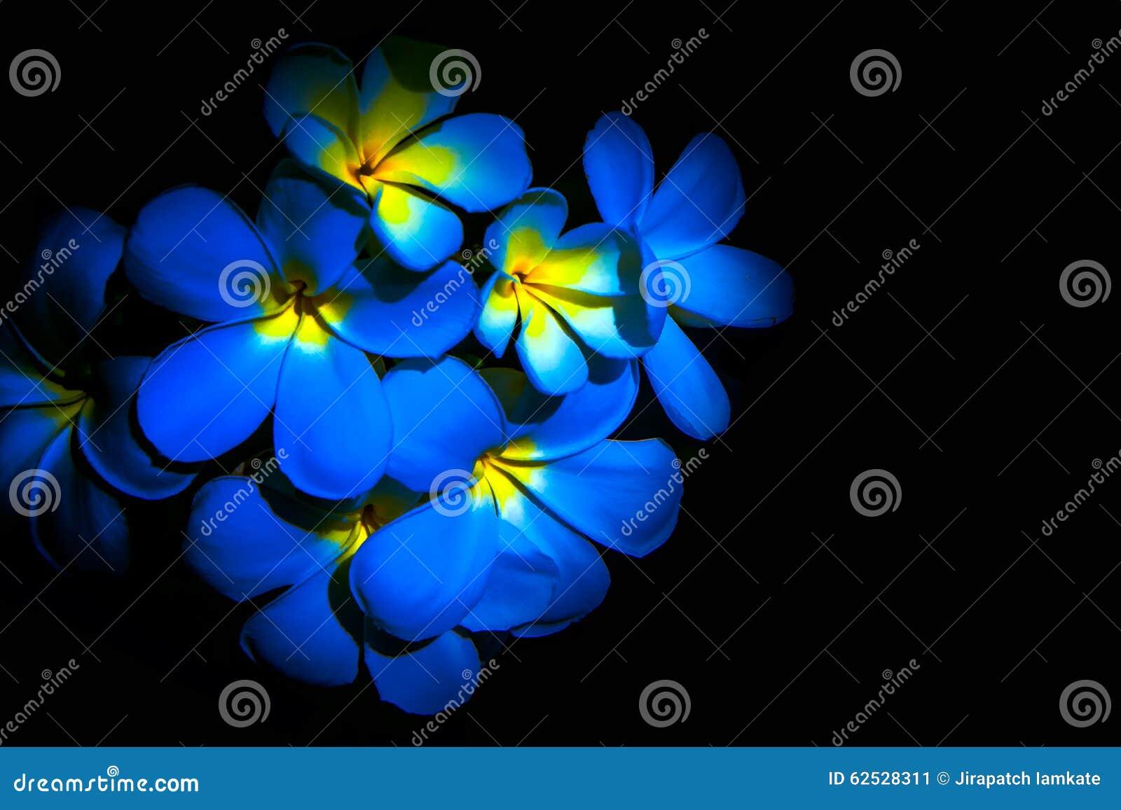蓝色羽毛花