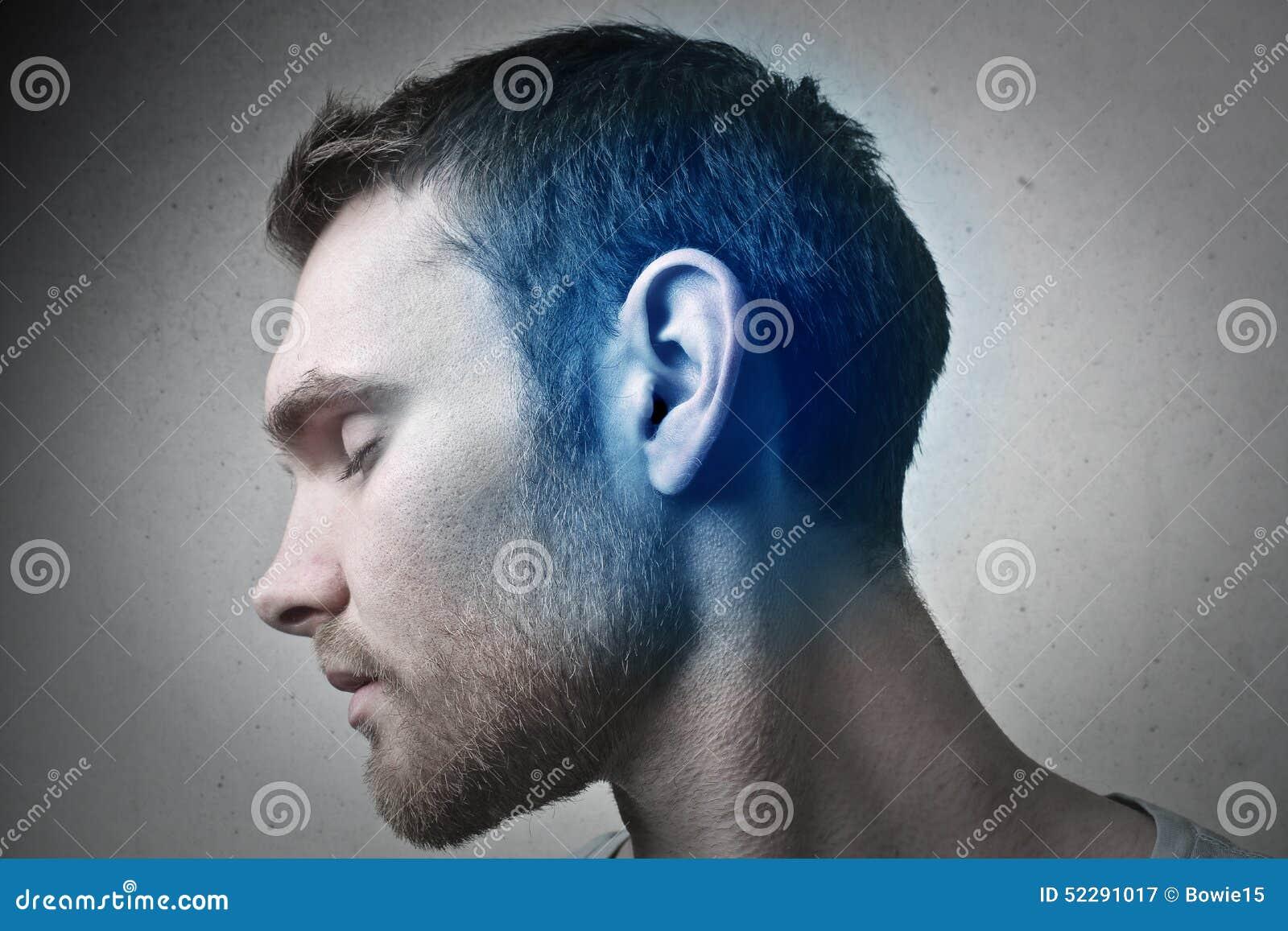 蓝色耳朵图片