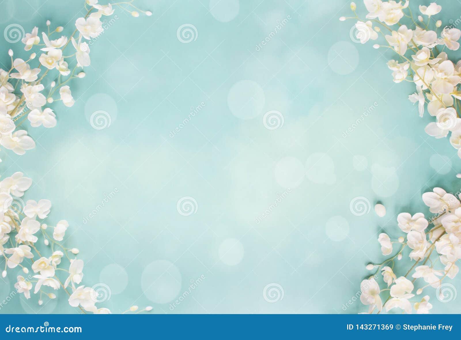 蓝色花卉Bokeh春天背景