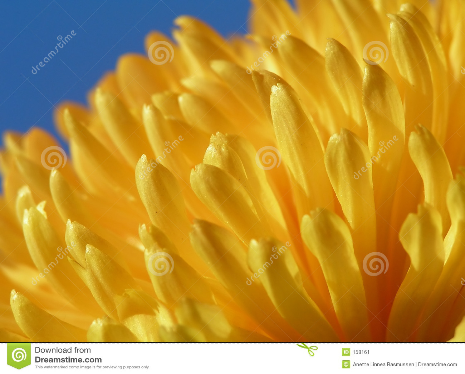 蓝色花天空黄色