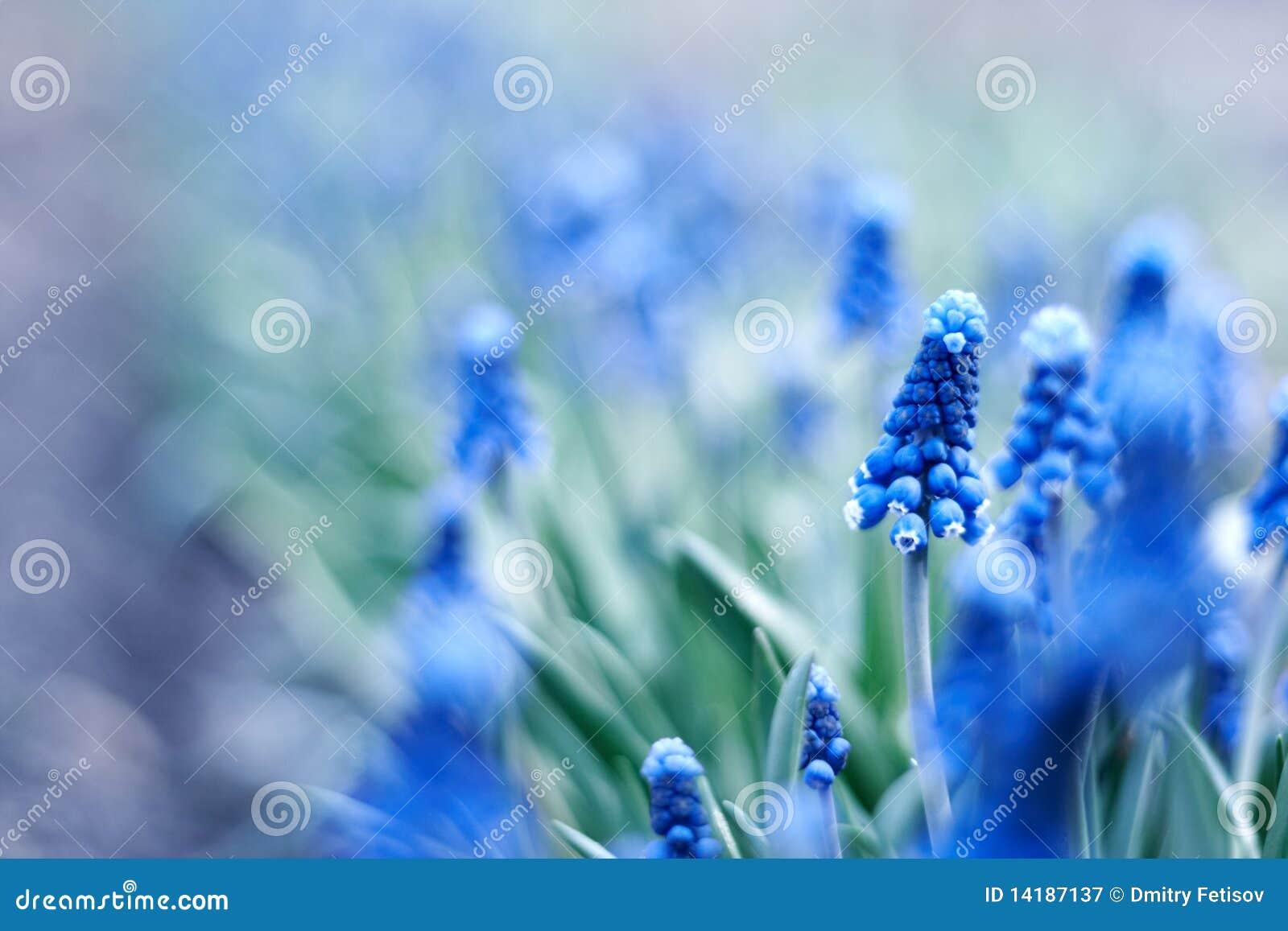 蓝色花春天年轻人