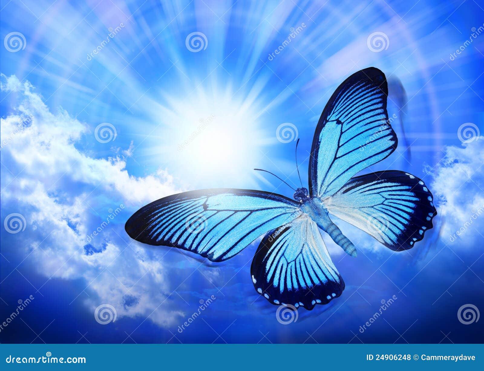蓝色蝴蝶天空星期日
