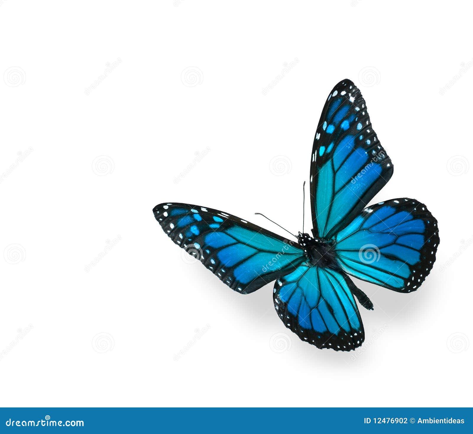 蓝色蝴蝶绿色查出的白色