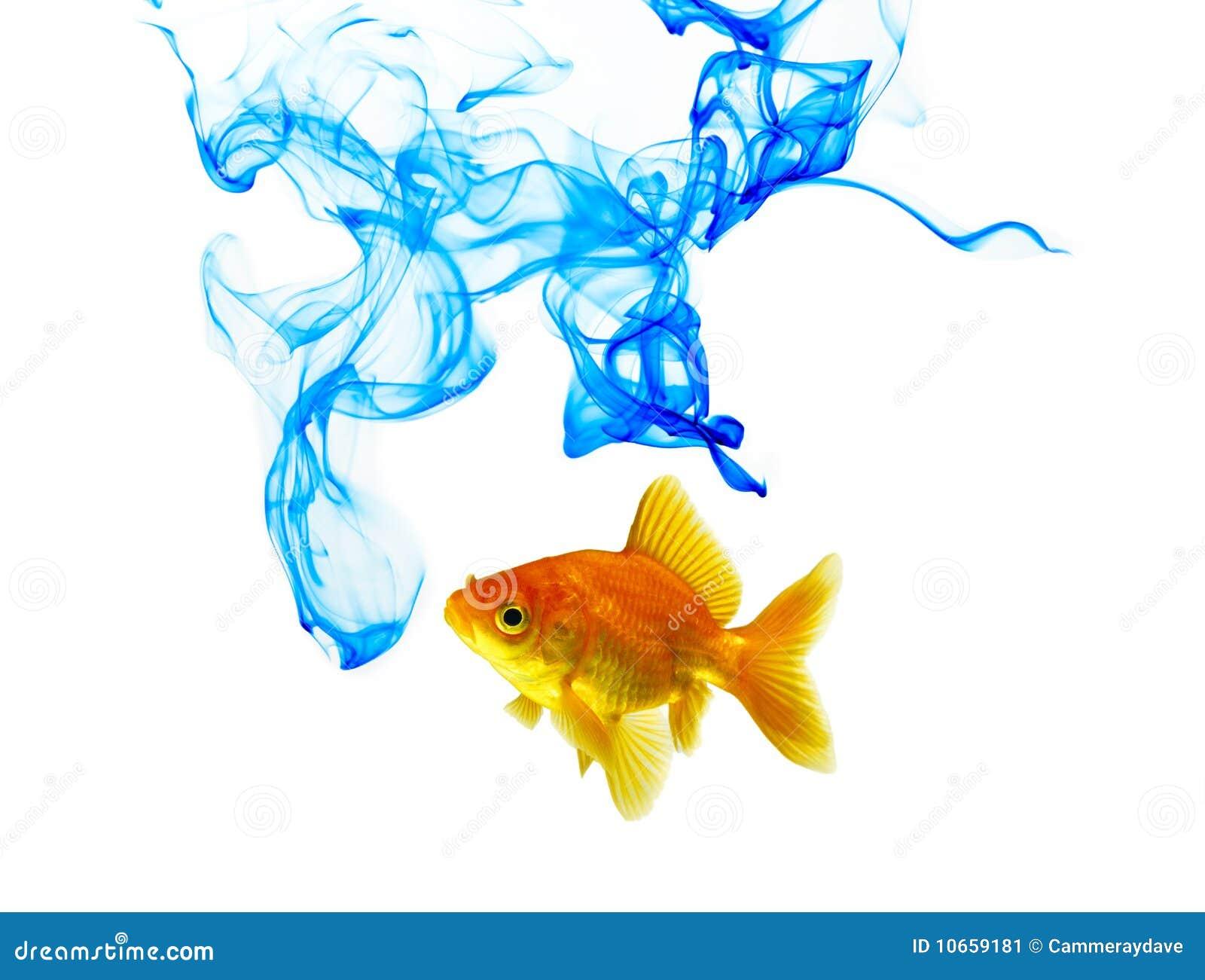 蓝色颜色金鱼墨水