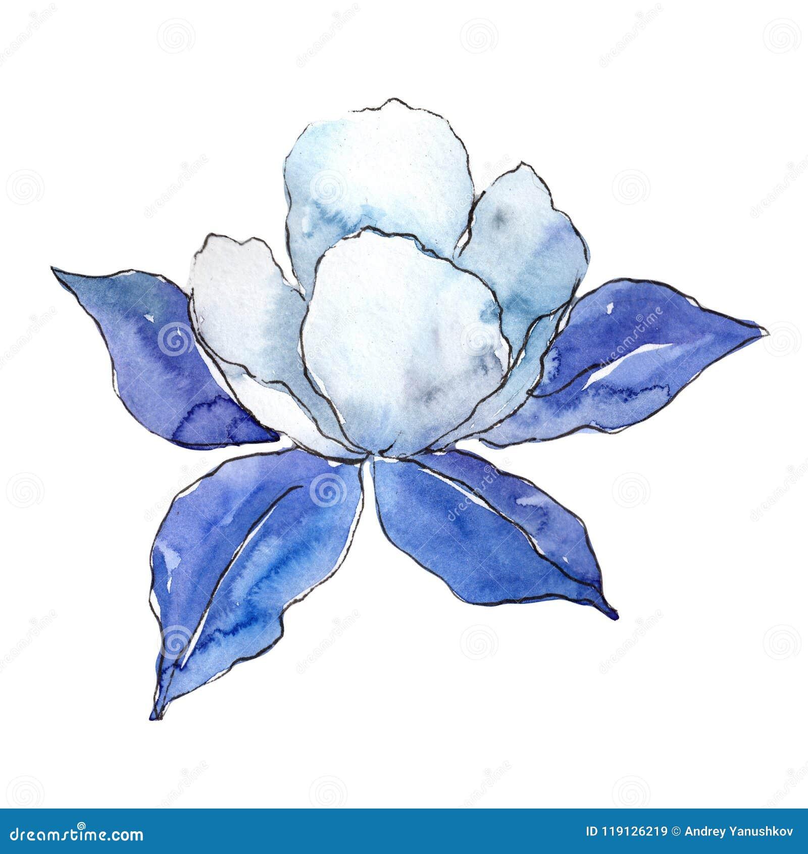 蓝色Aquilegia 花卉植物的花 被隔绝的野生春天叶子野花