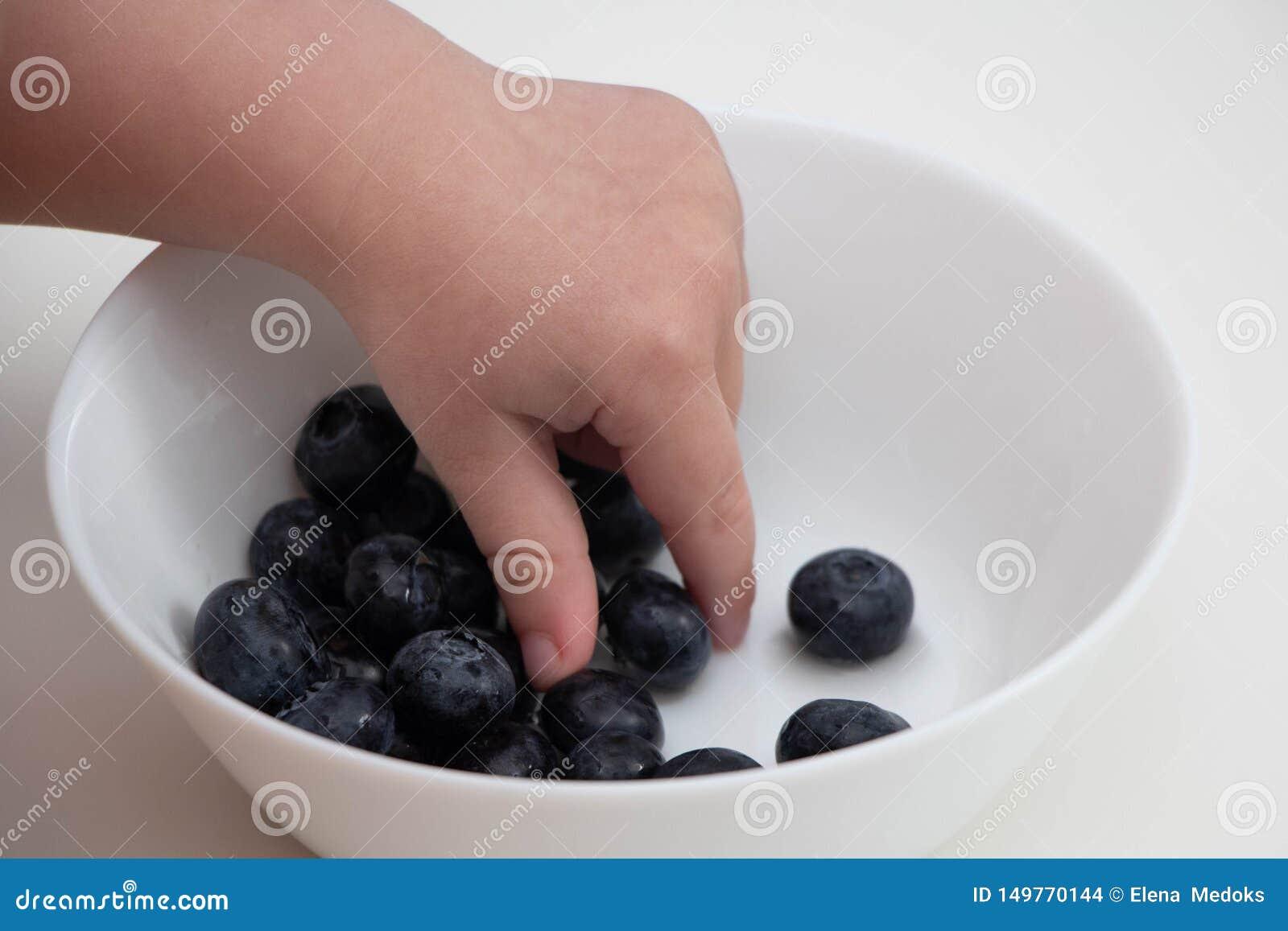 蓝莓在孩子的手上 儿童的手采取从一个白色碗的蓝莓在白色背景