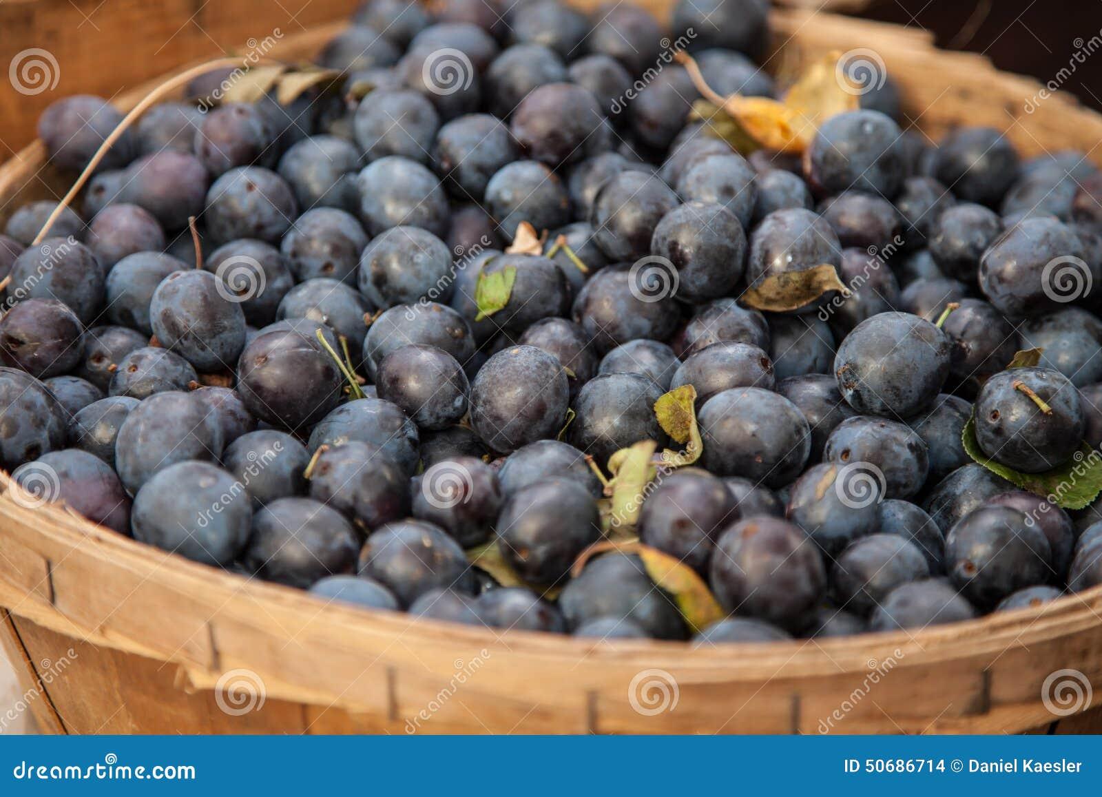 Download 蓝莓 库存照片. 图片 包括有 蓝莓, 有机, berrying, 收获, 食物, 维生素, 类似, 庄稼 - 50686714