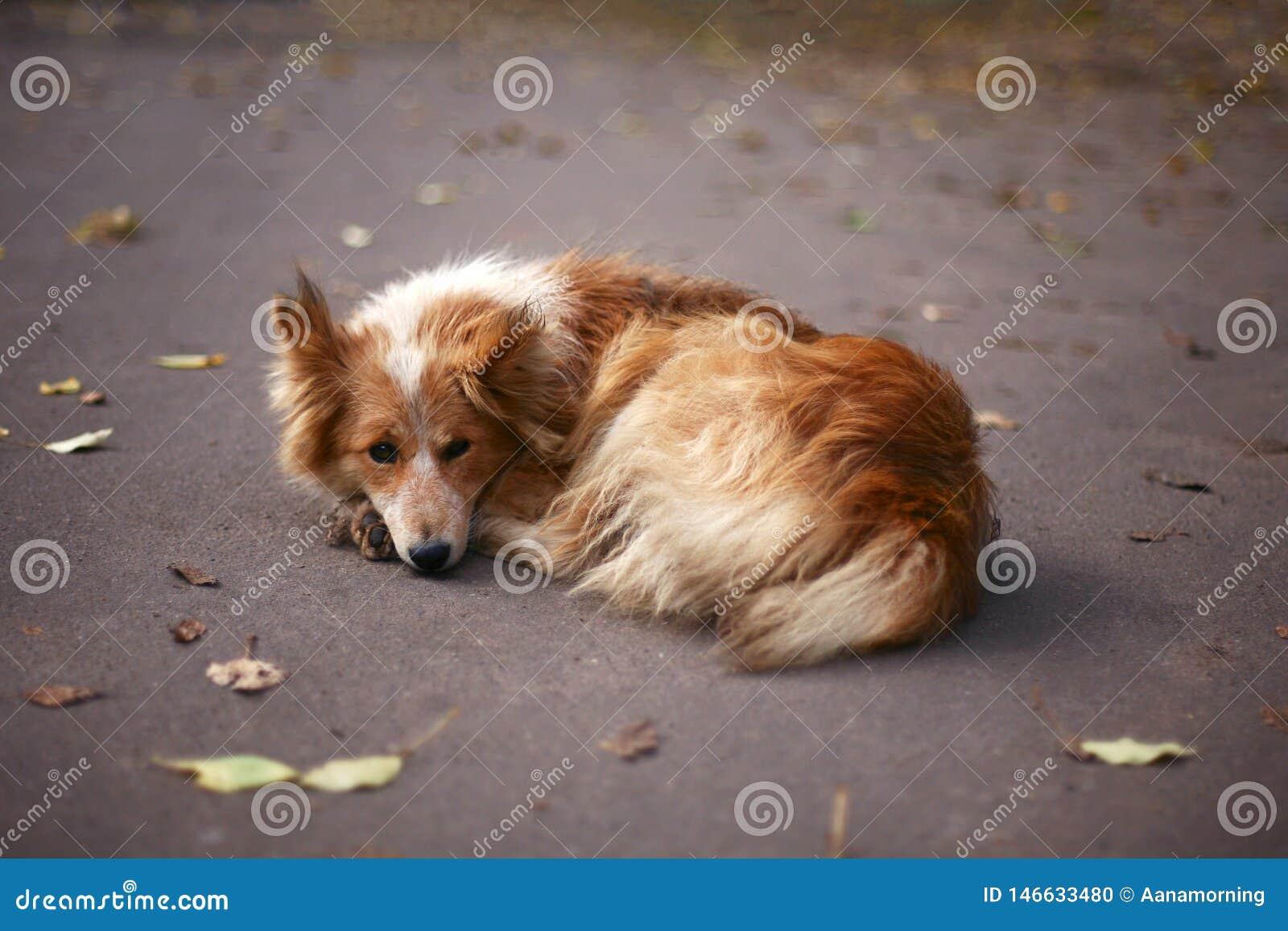 蓬松狗画象在公园在秋天