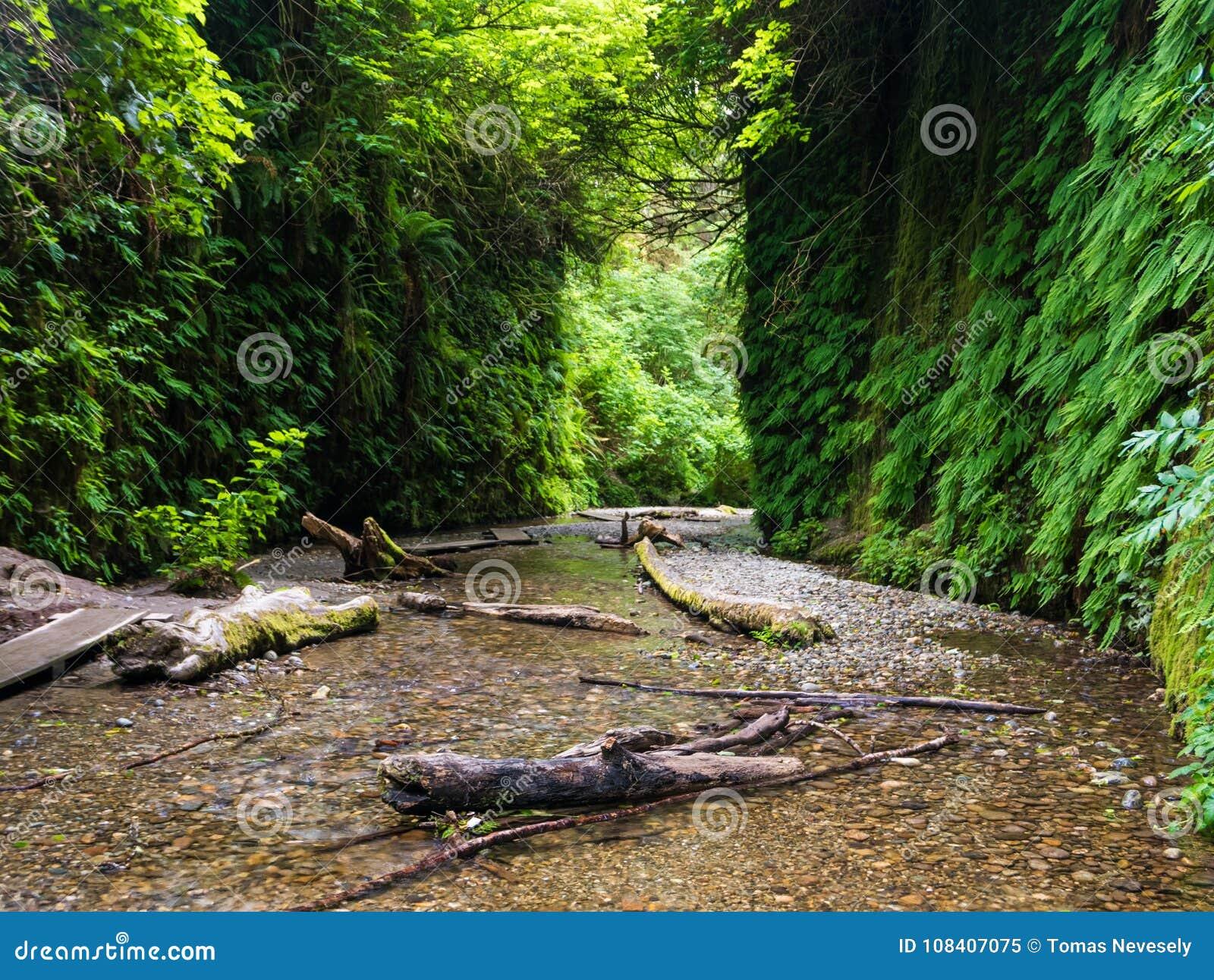 蕨峡谷在红木国家公园