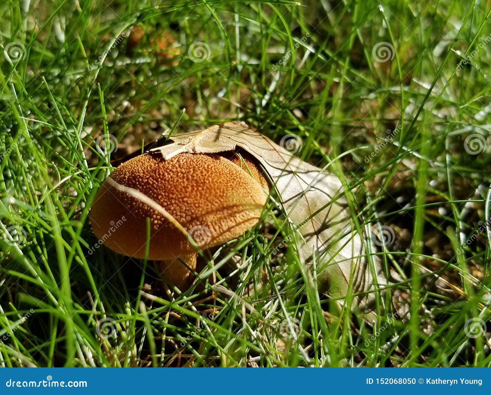 蘑菇和叶子
