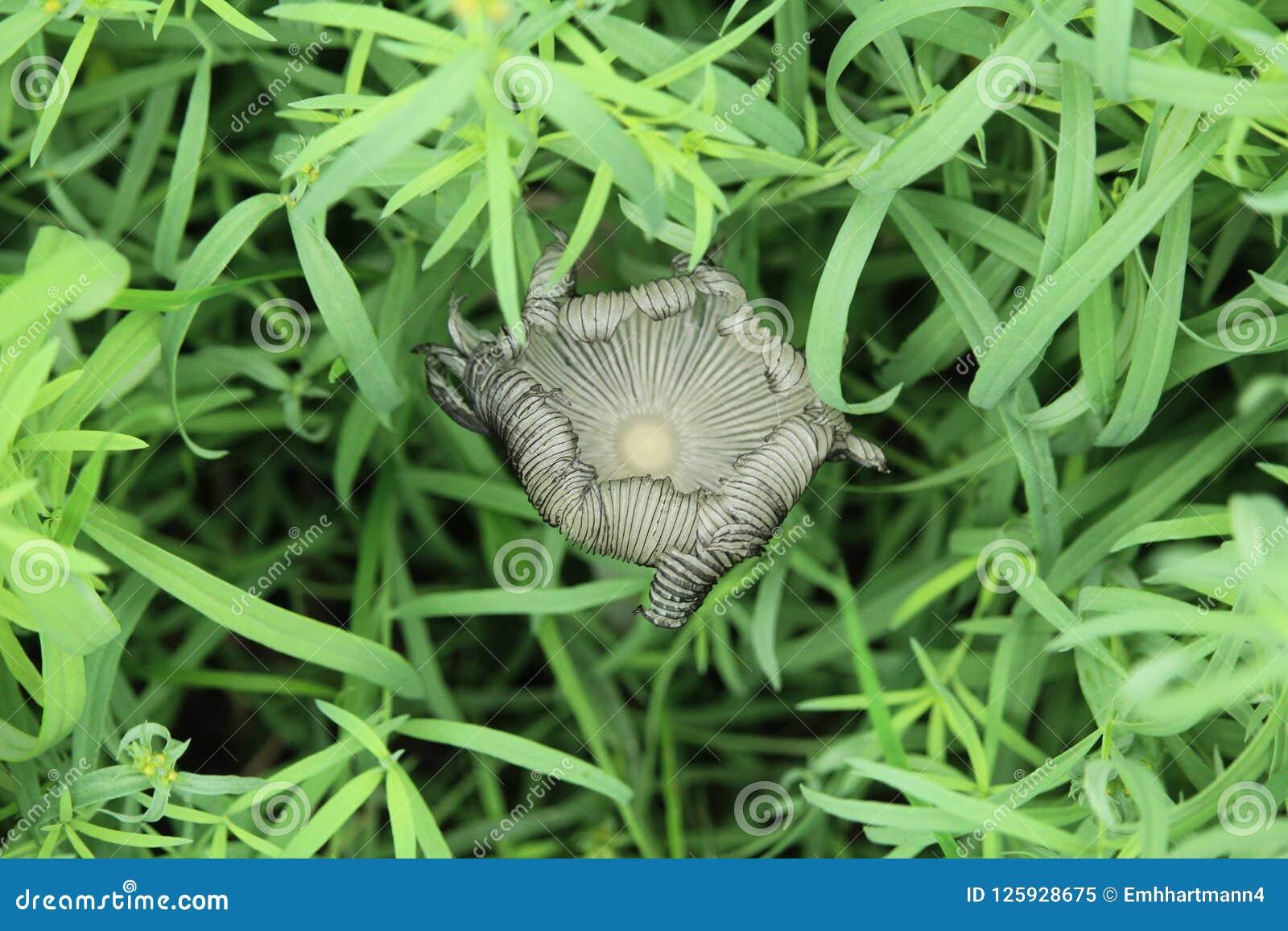 蘑菇,在草的真菌