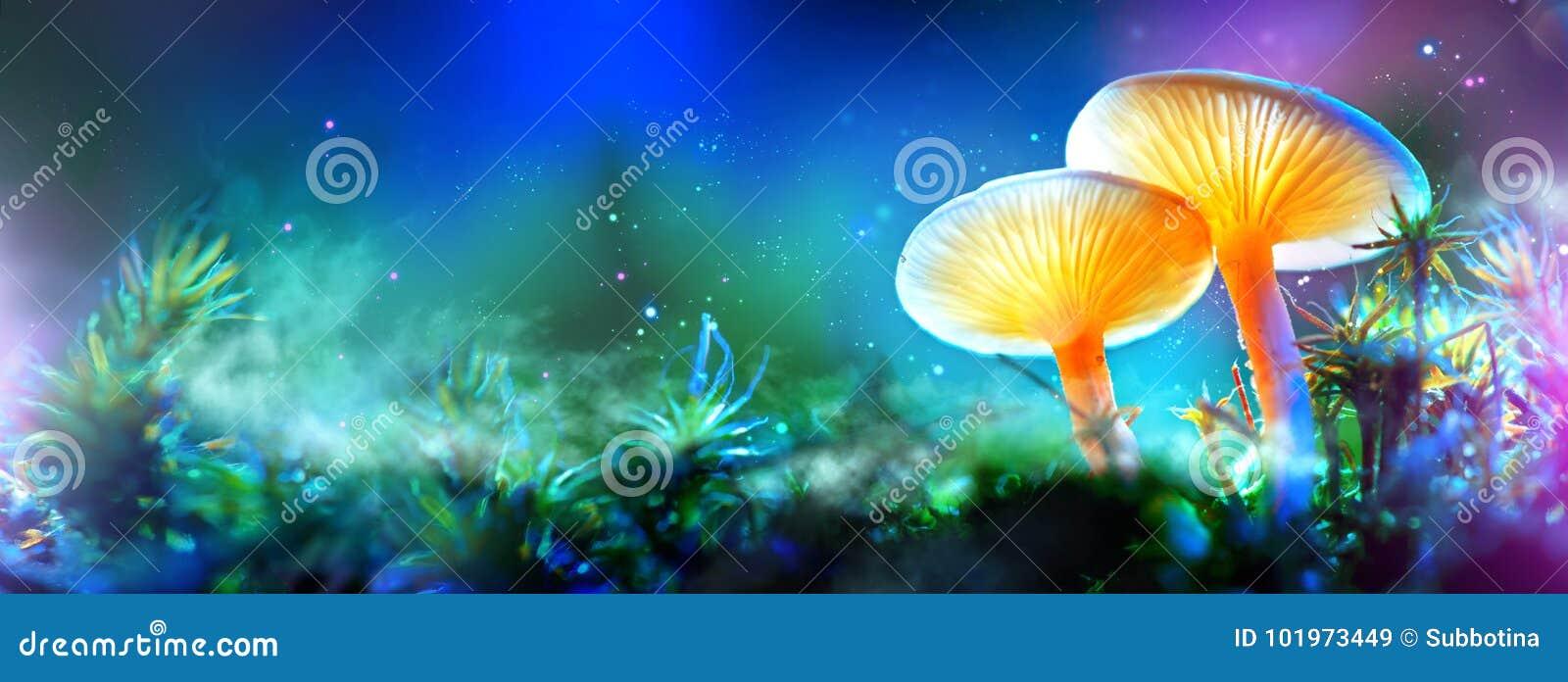 蘑菇 幻想发光的蘑菇在奥秘黑暗森林里